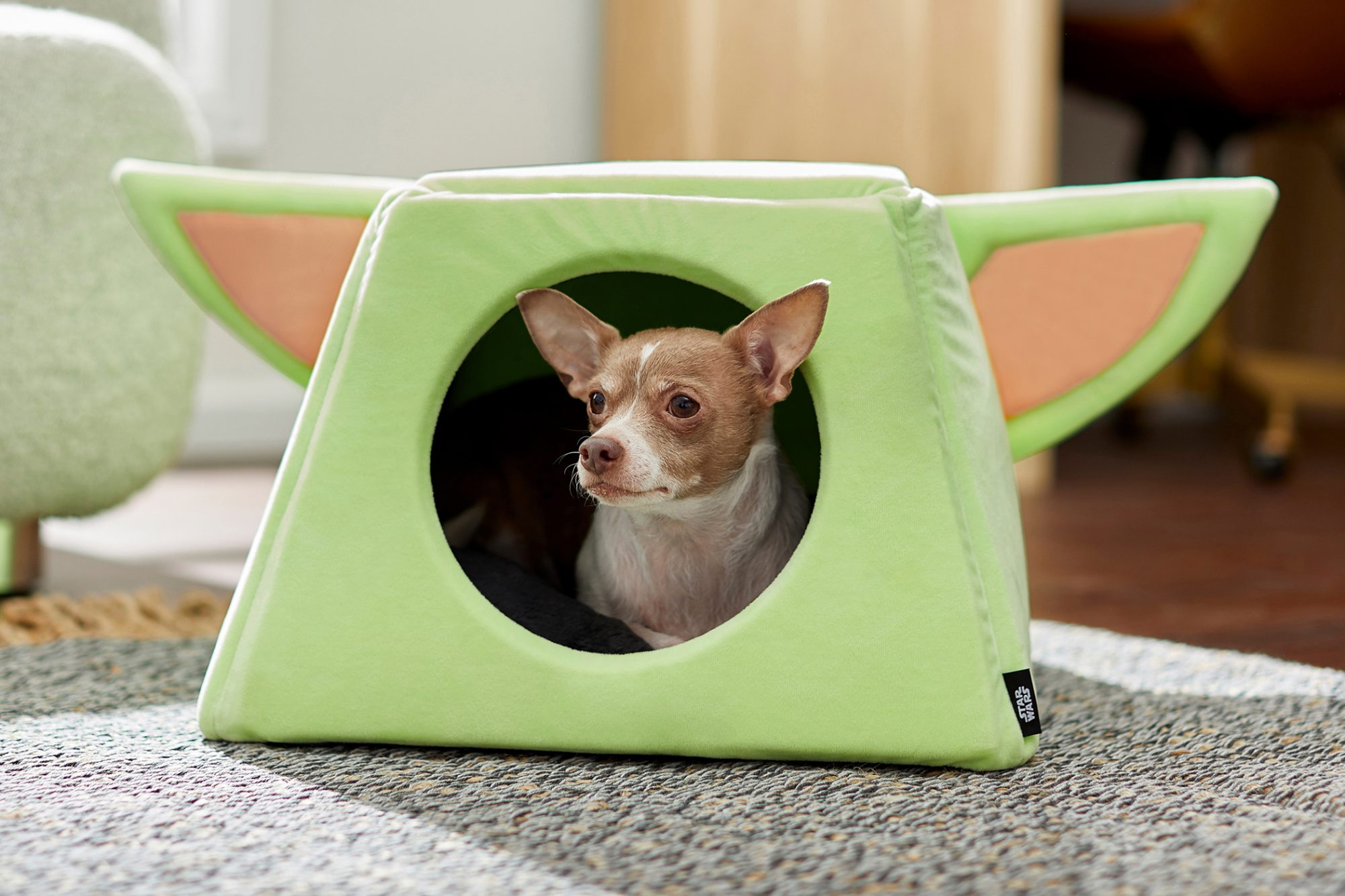 dog in yoda dog house