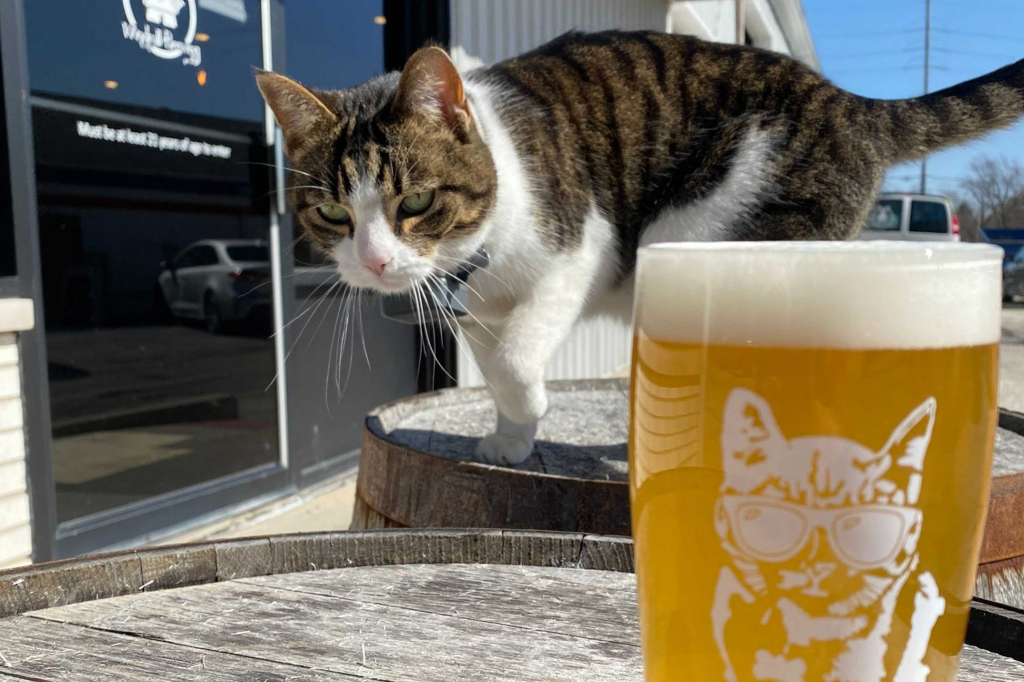 Luther, the cat, posing with a glass of brew