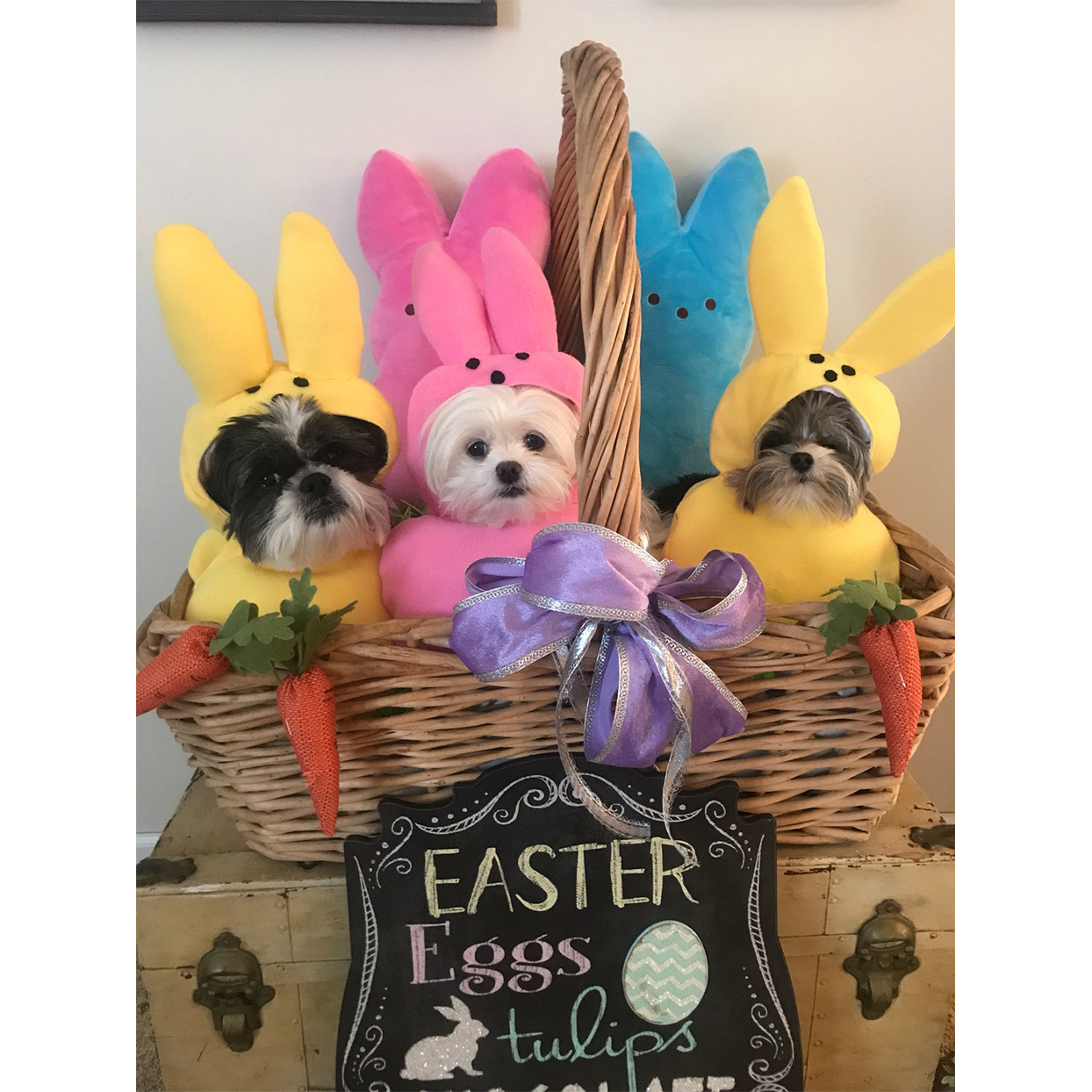 easter peeps dog costume