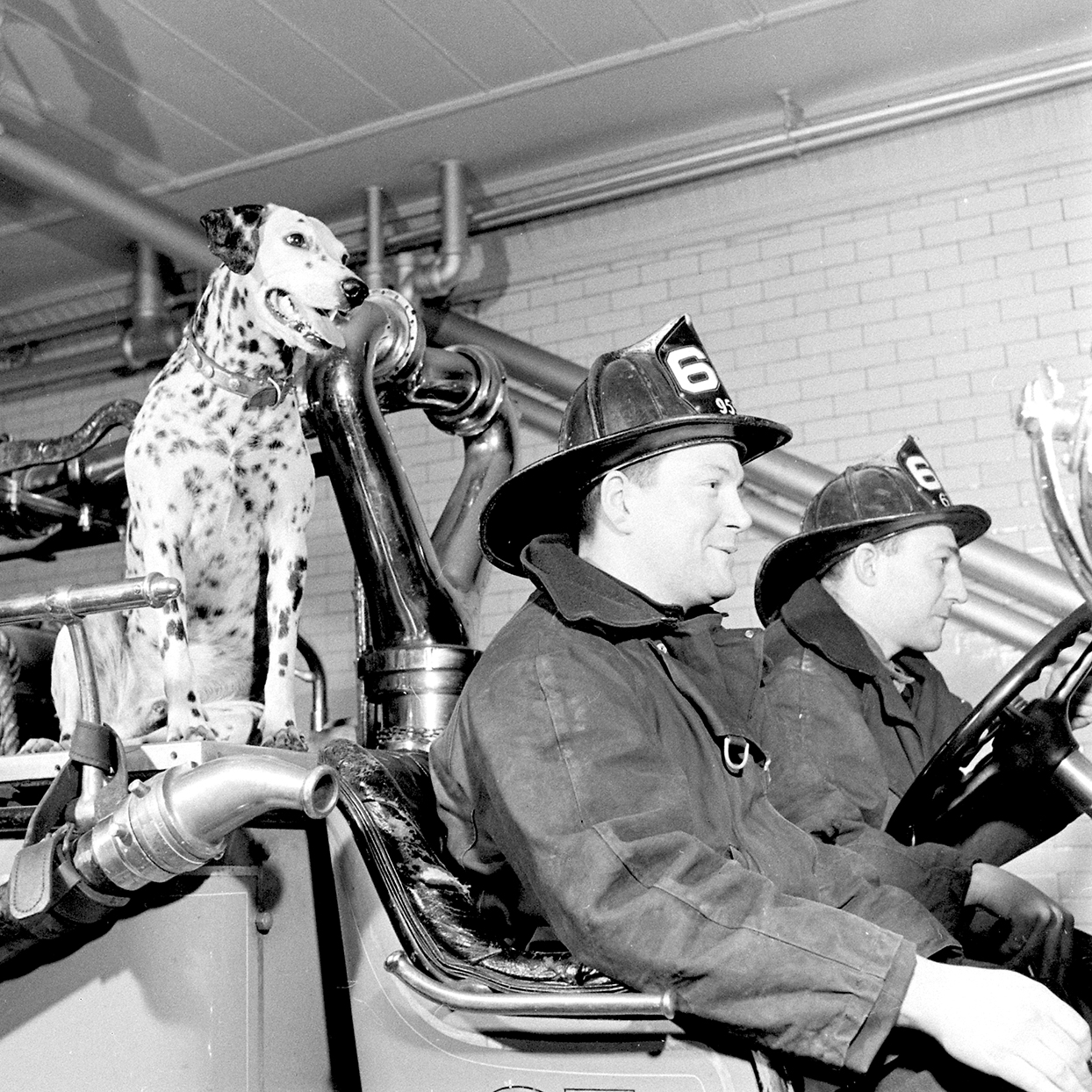 Black and white vintage image of Dalmatian on firetruck with two firefighters