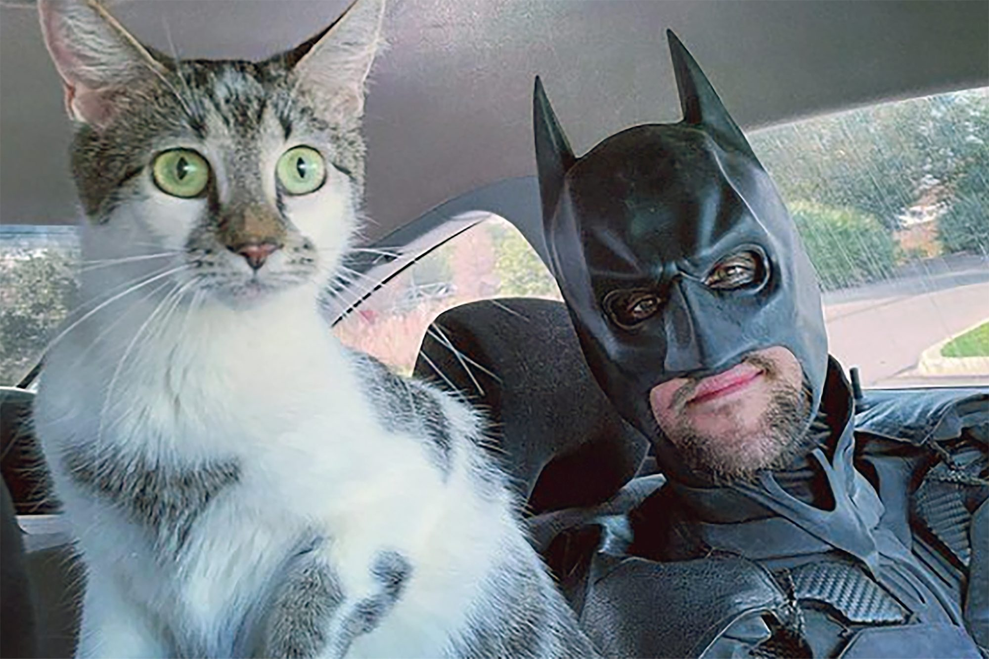 Batman posing with grey and white cat