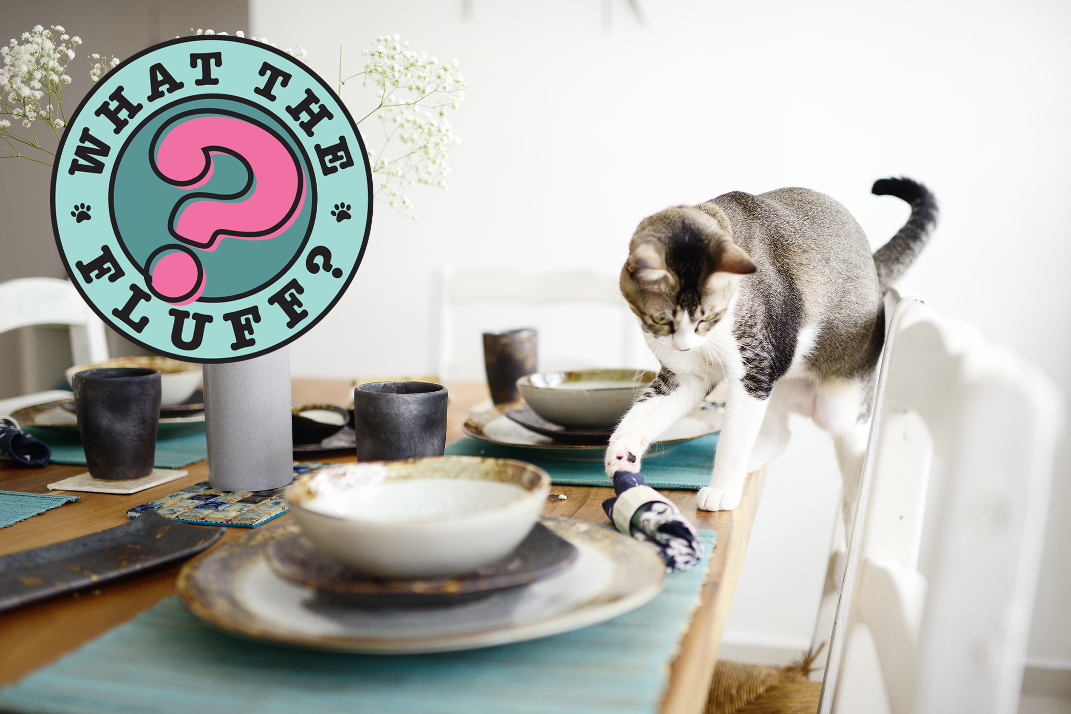 Grey and white cat uses paw to push rolled napkin off set table with What the Fluff logo
