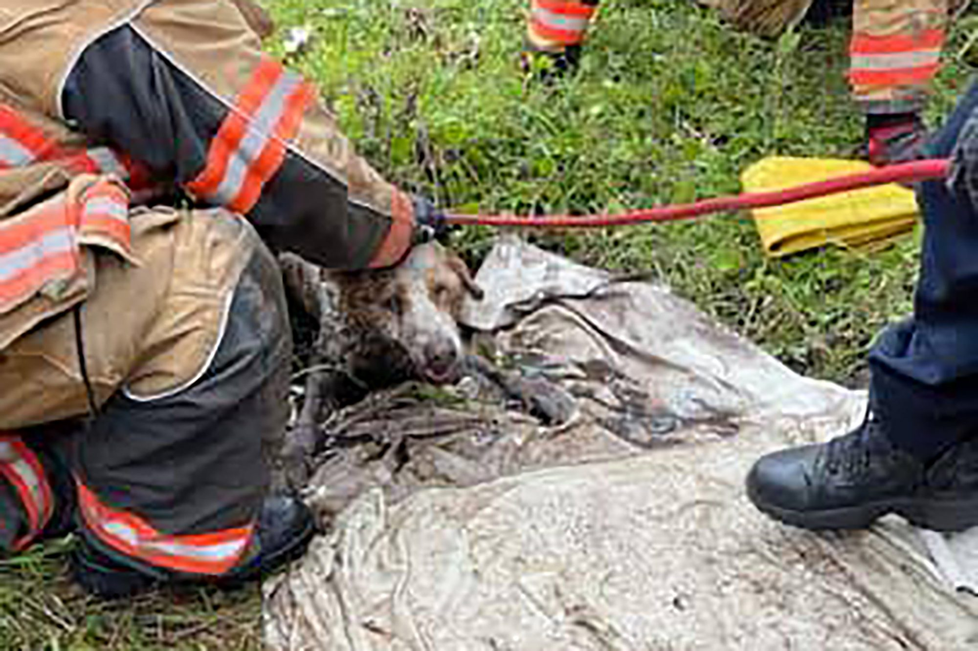 Firefighters save muddy dog from pipe