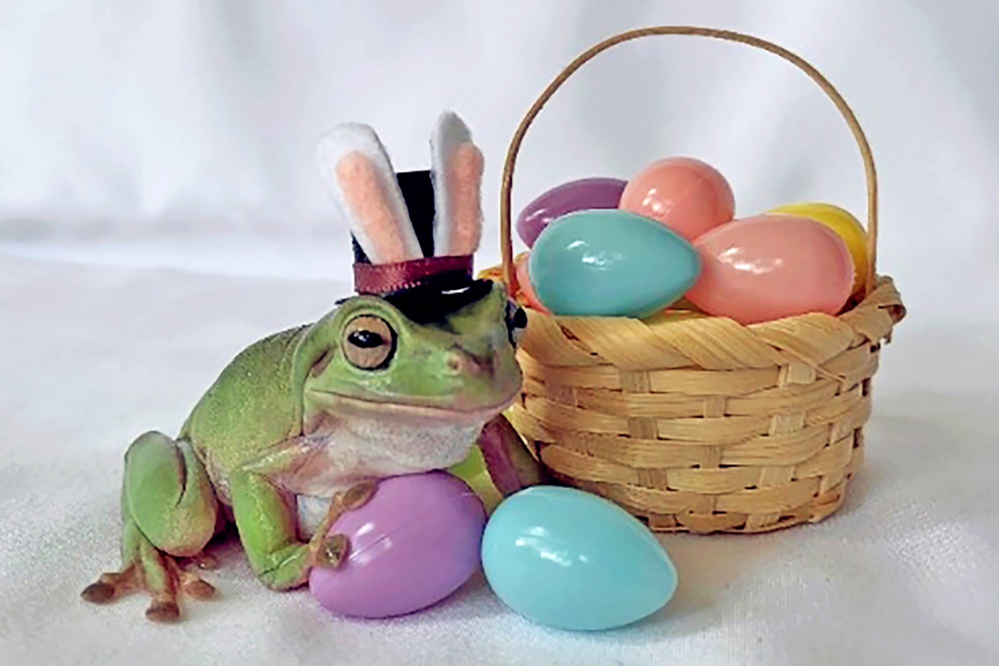 Frog poses with bunny ears and plastic Easter eggs as Cadbury winner