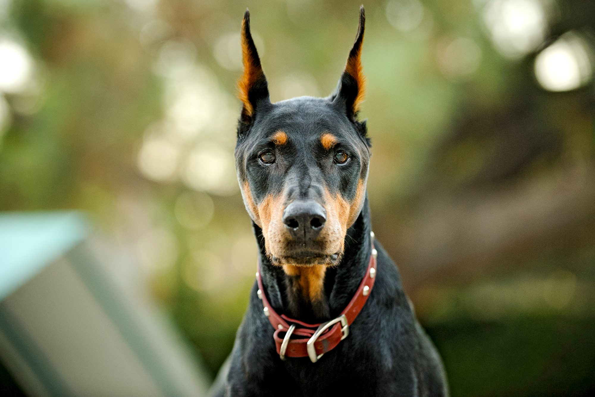 15 of the Smartest Dog Breeds