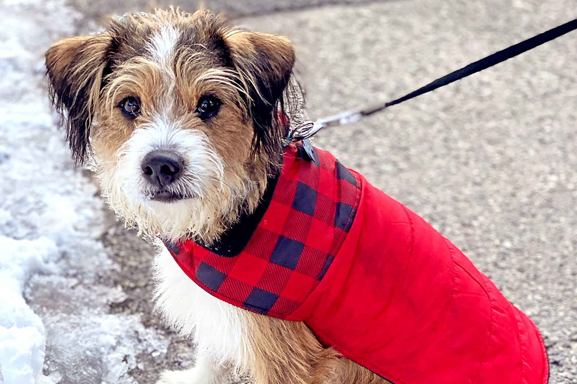 Fluffy small dog wears red coat on snowy sidewalk