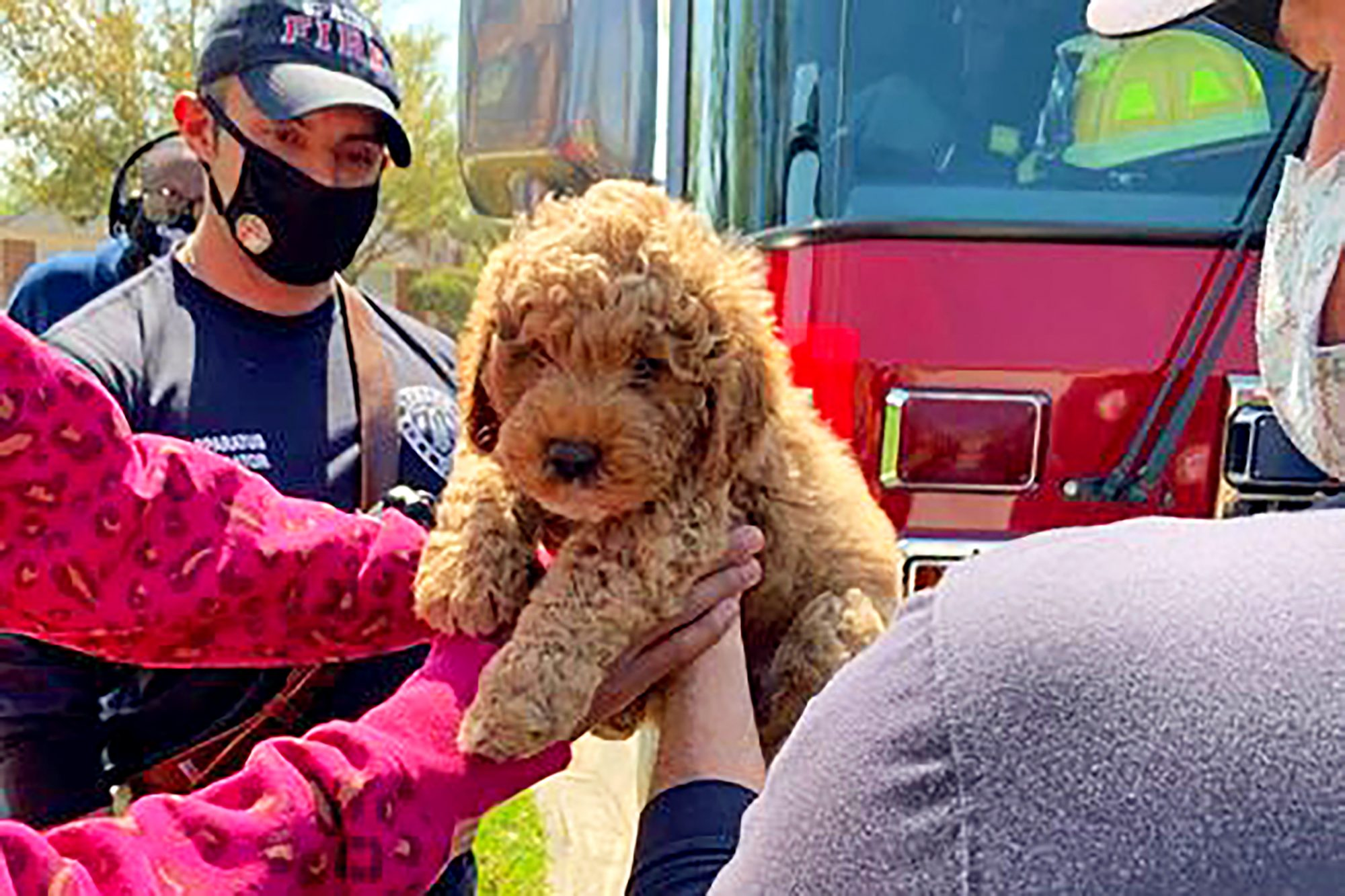Golden doodle puppy embraced by owner's outstretched hands after rescued by firemen