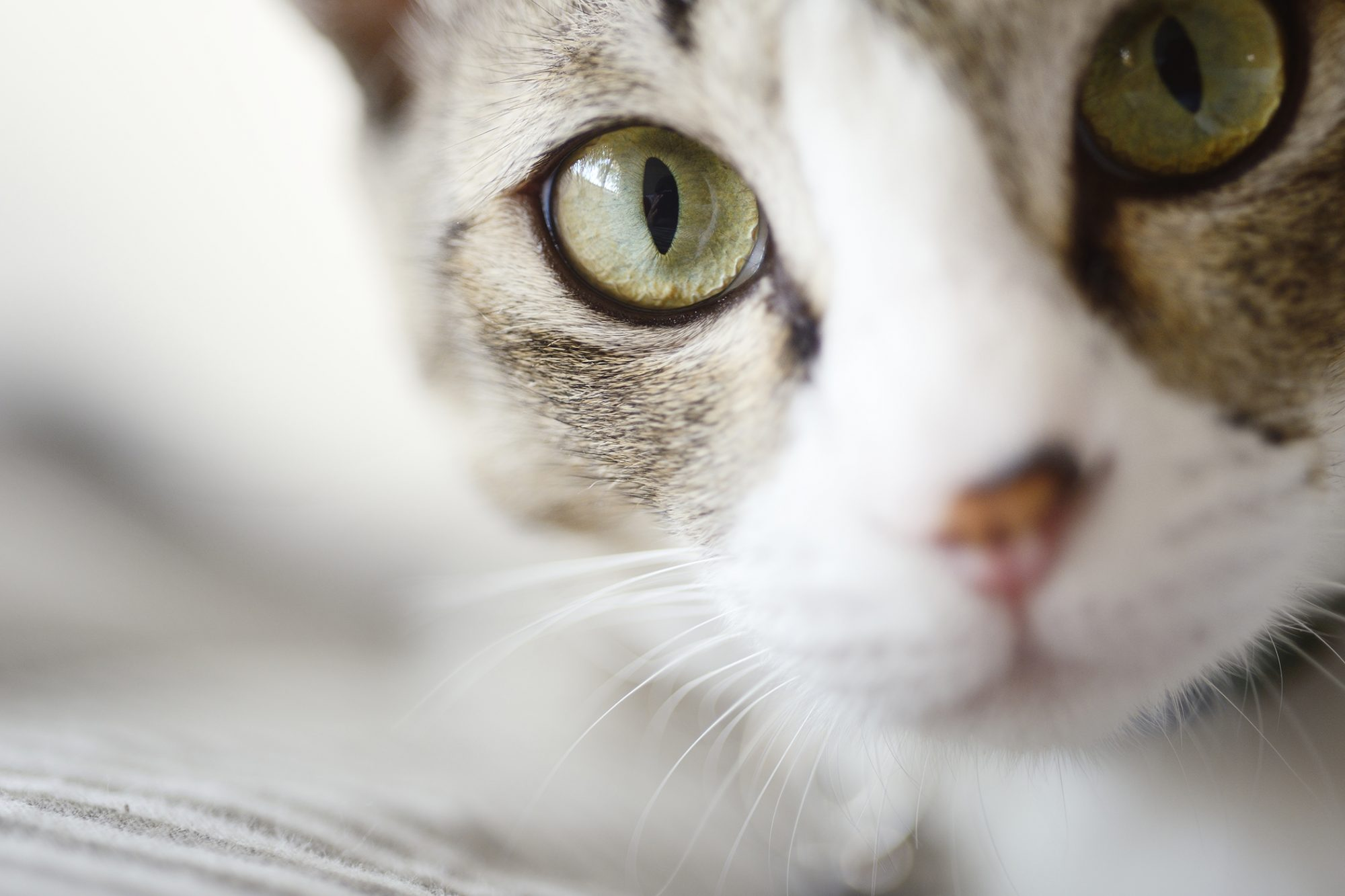 Close up of white and grey cat with green eyes