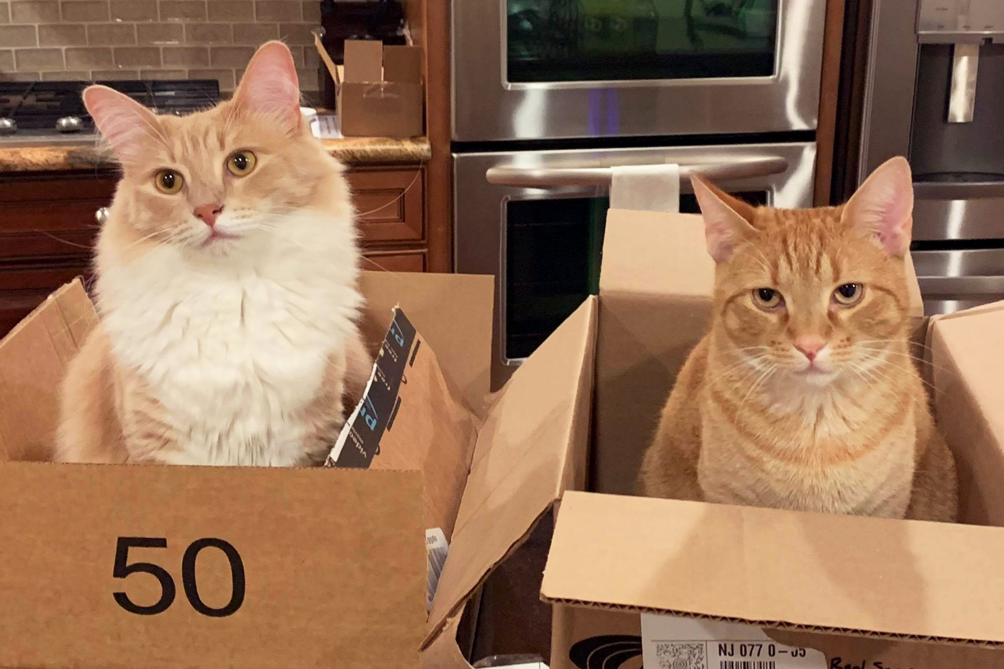 two cats in cardboard boxes
