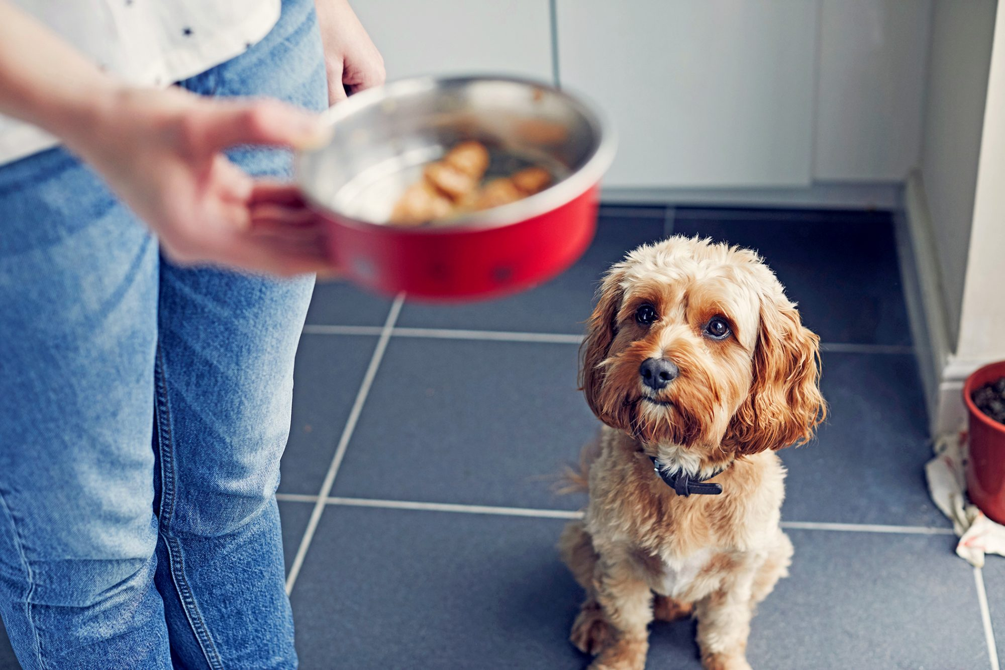woman handing dog a bowl of dog food