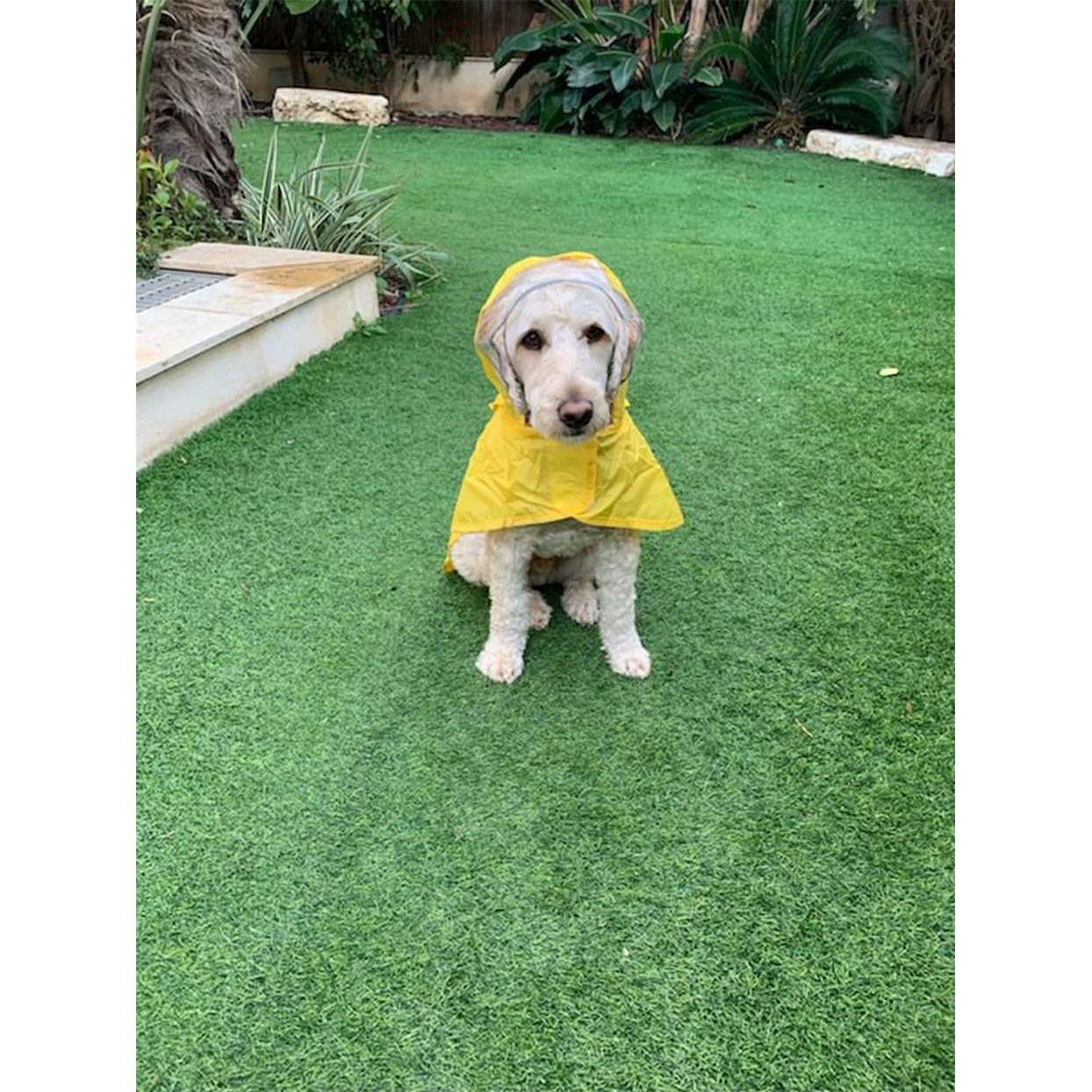 rain poncho for dogs