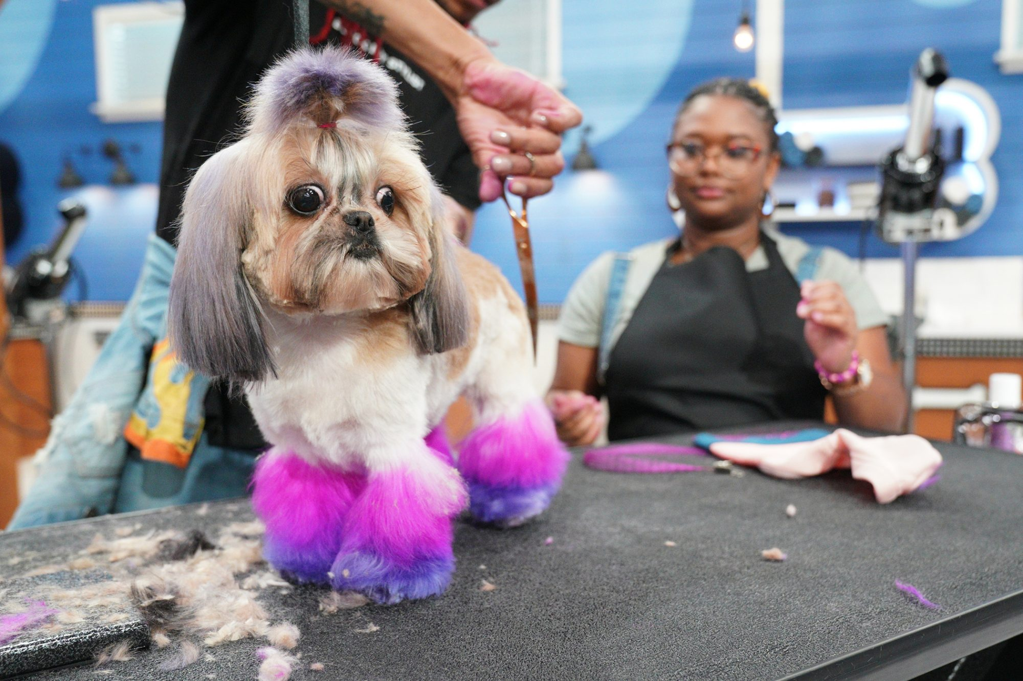 dog getting groomed on Pooched Perfect