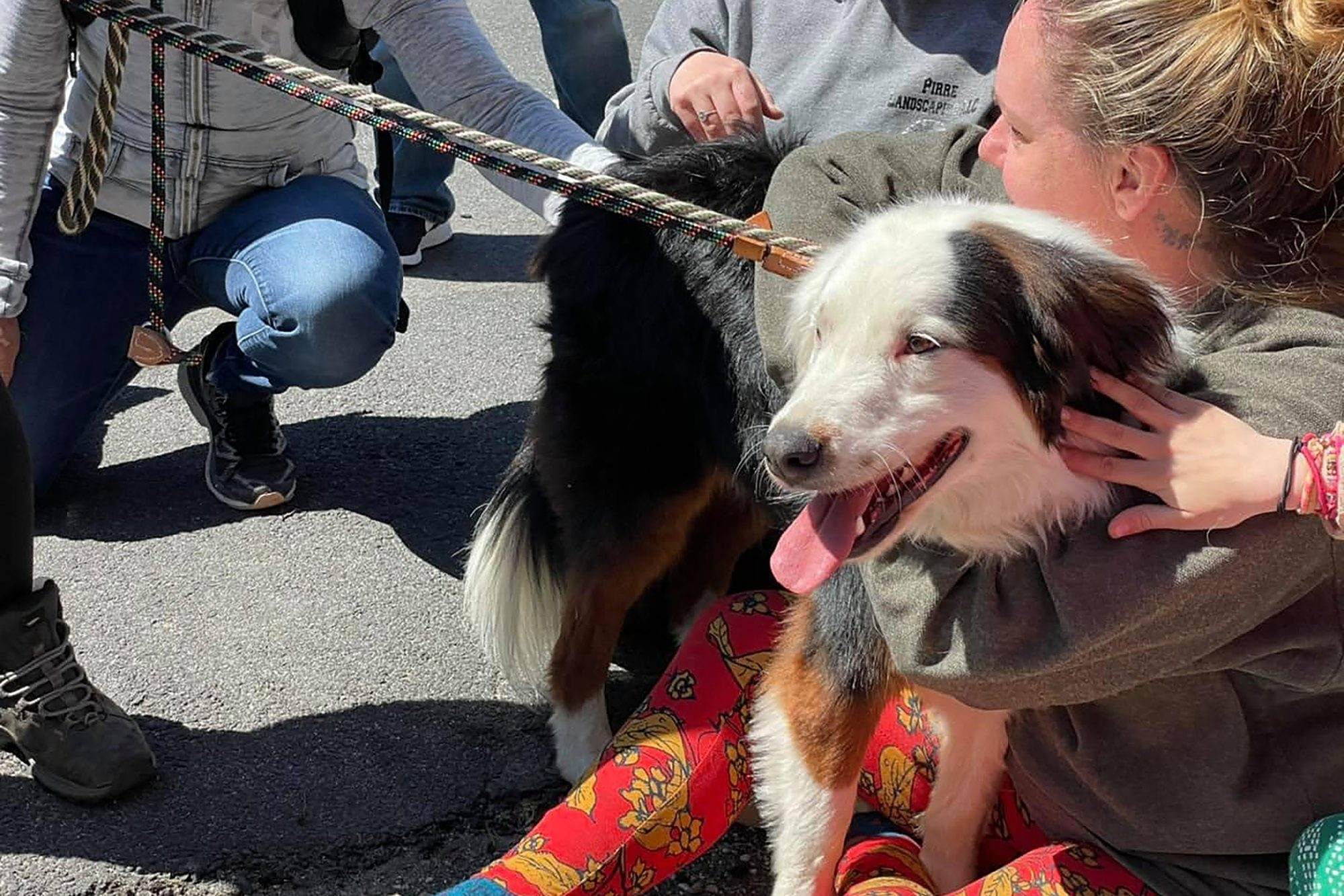 Dog held after being rescued from cliff