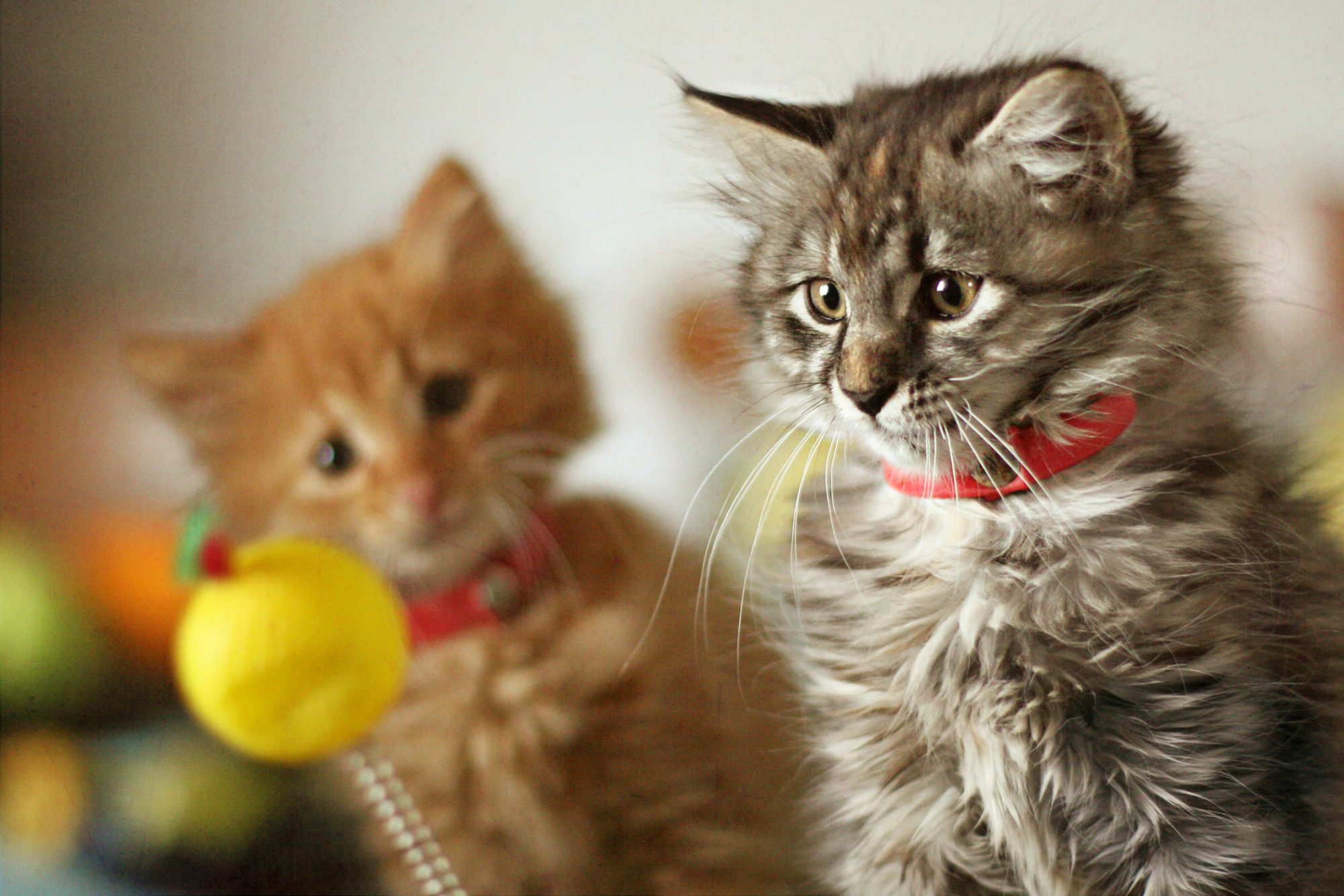 Two kittens play with ball toy on a stick