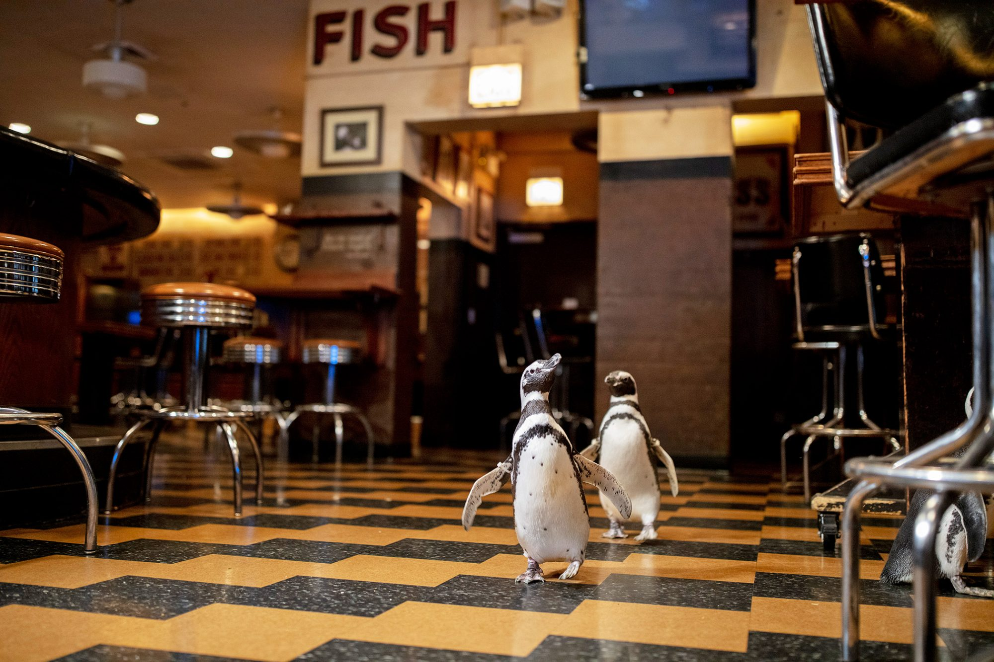 two penguins walking through a restautant