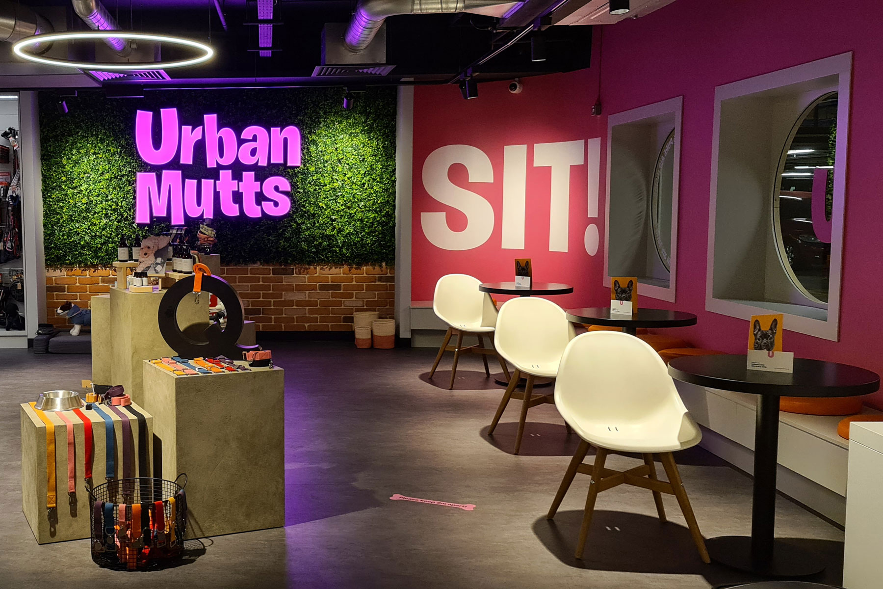 Interior shot of Urban Mutts hotel