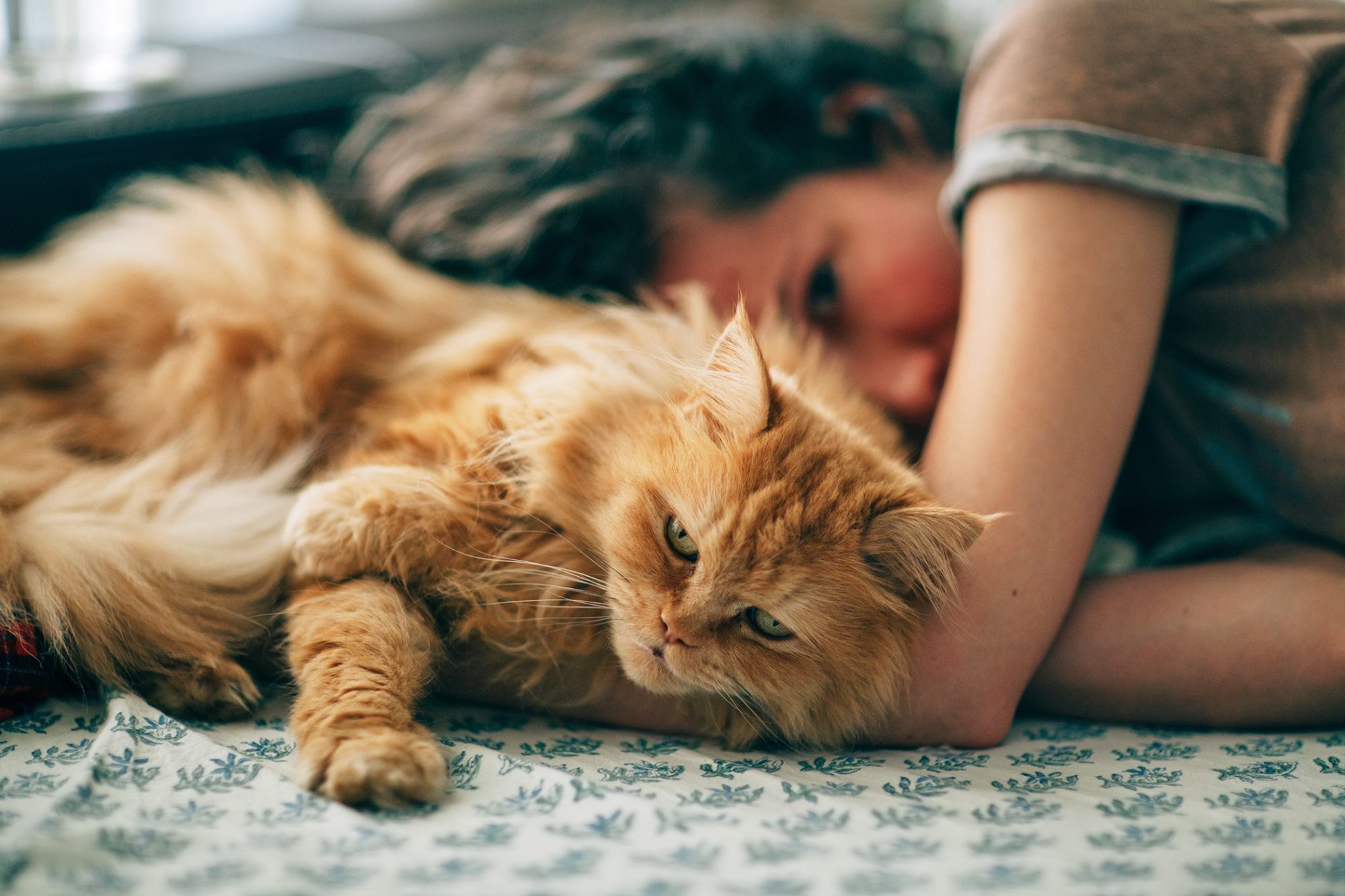 Orange persian cat cuddles with woman on bed