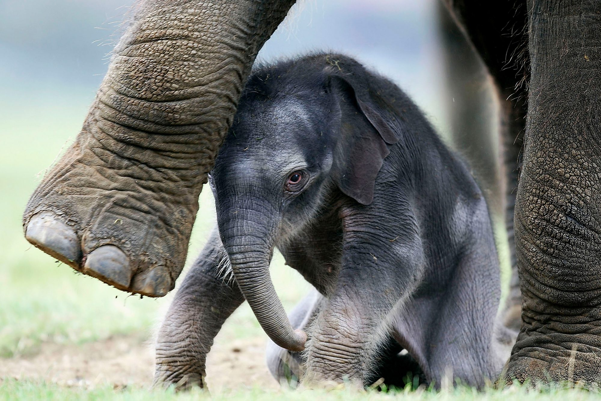 baby elephant with his mother