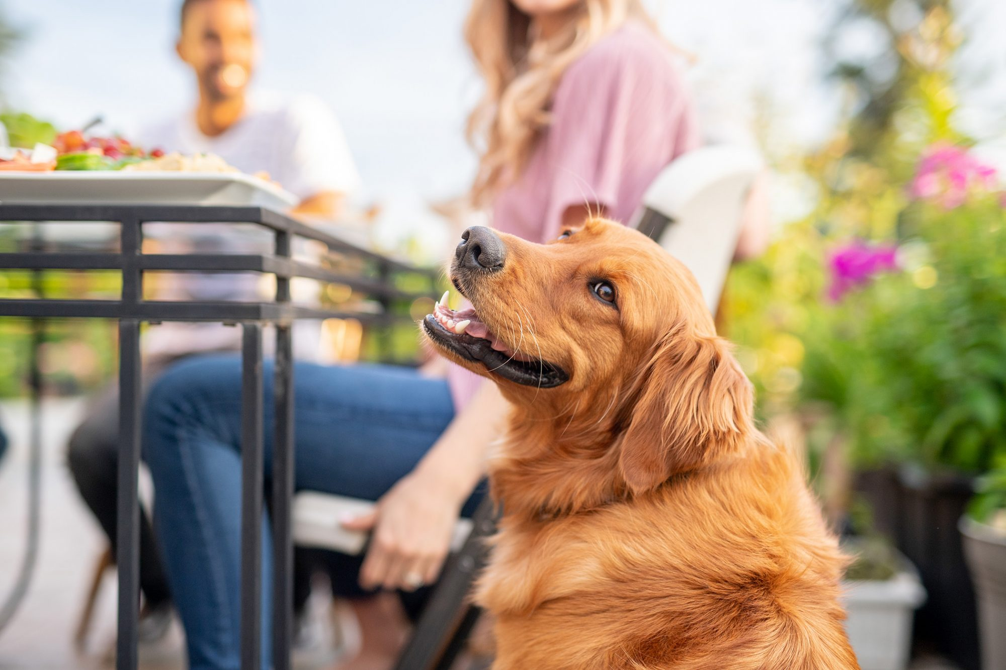 A group of young adult friends dining al fresco on a patio with Golden Retriever