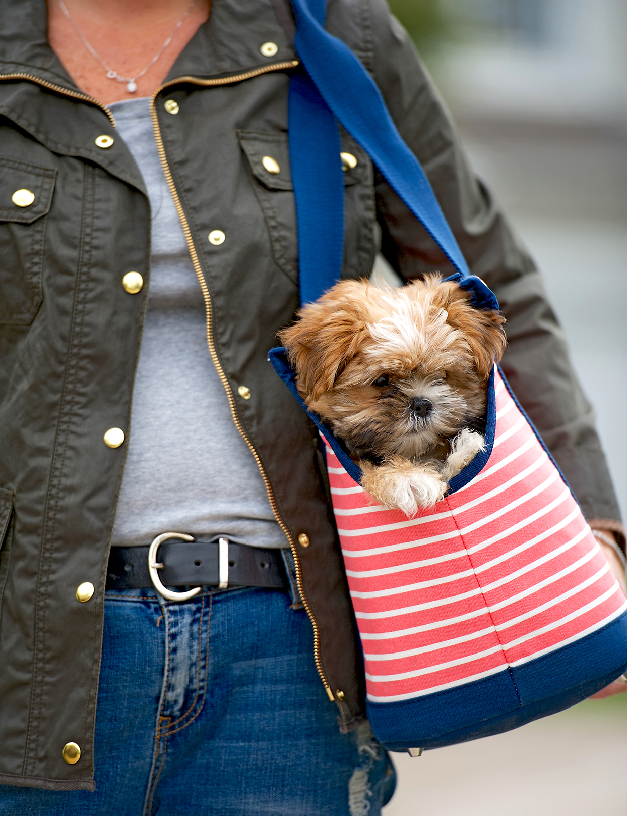 Brown and blonde shorkie pokes head out of coral and navy striped tote bag on woman's arm
