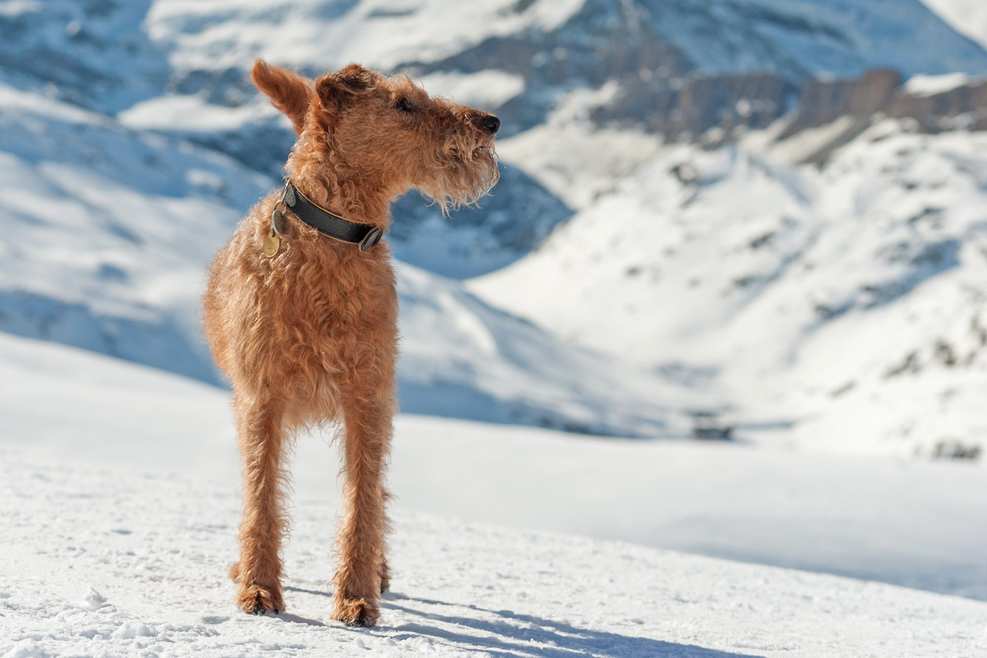 dog standing on snowy mountain
