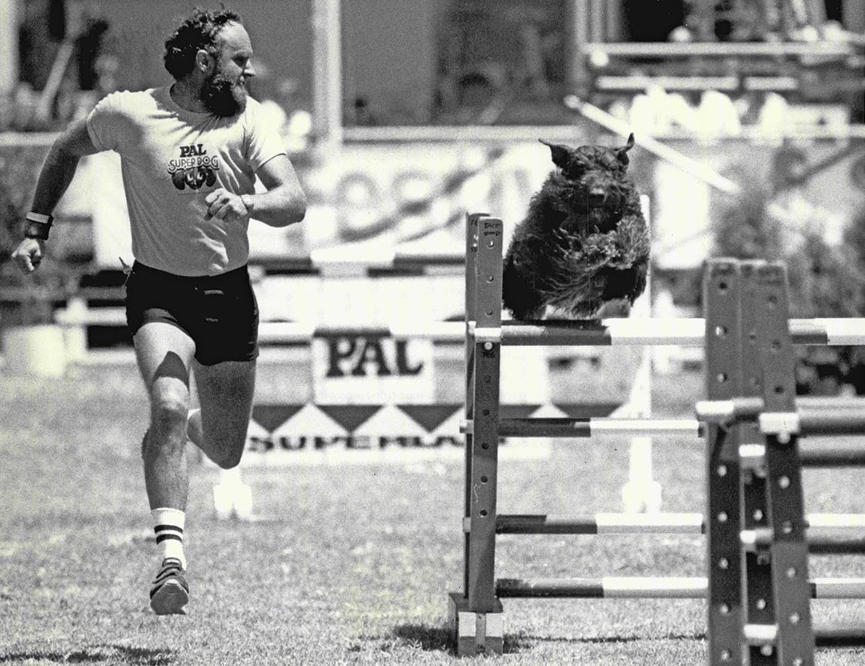 vintage image of man and Bouvier des Flandres on agility course