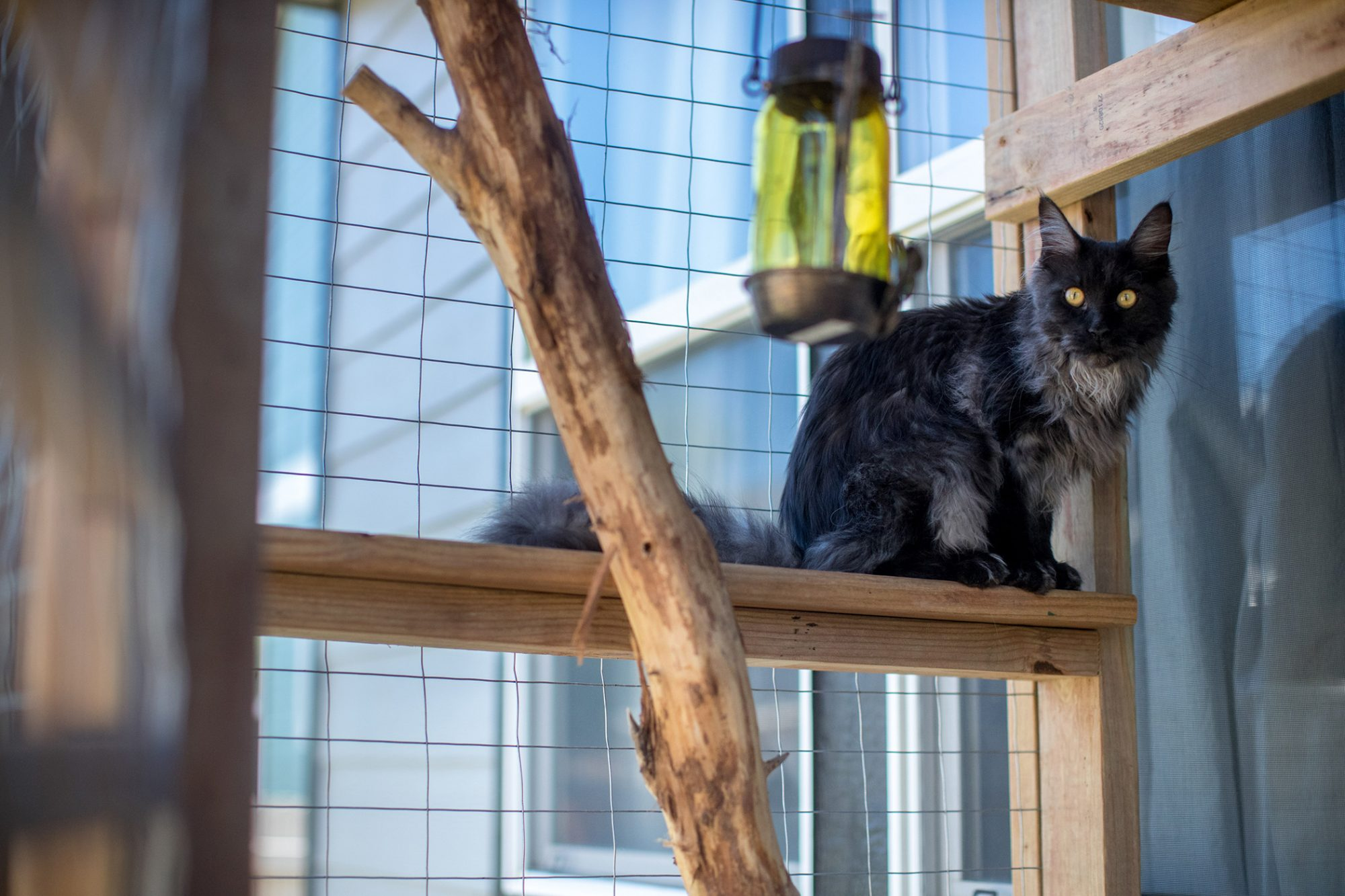 black long-haired cat sitting on a ledge in catio