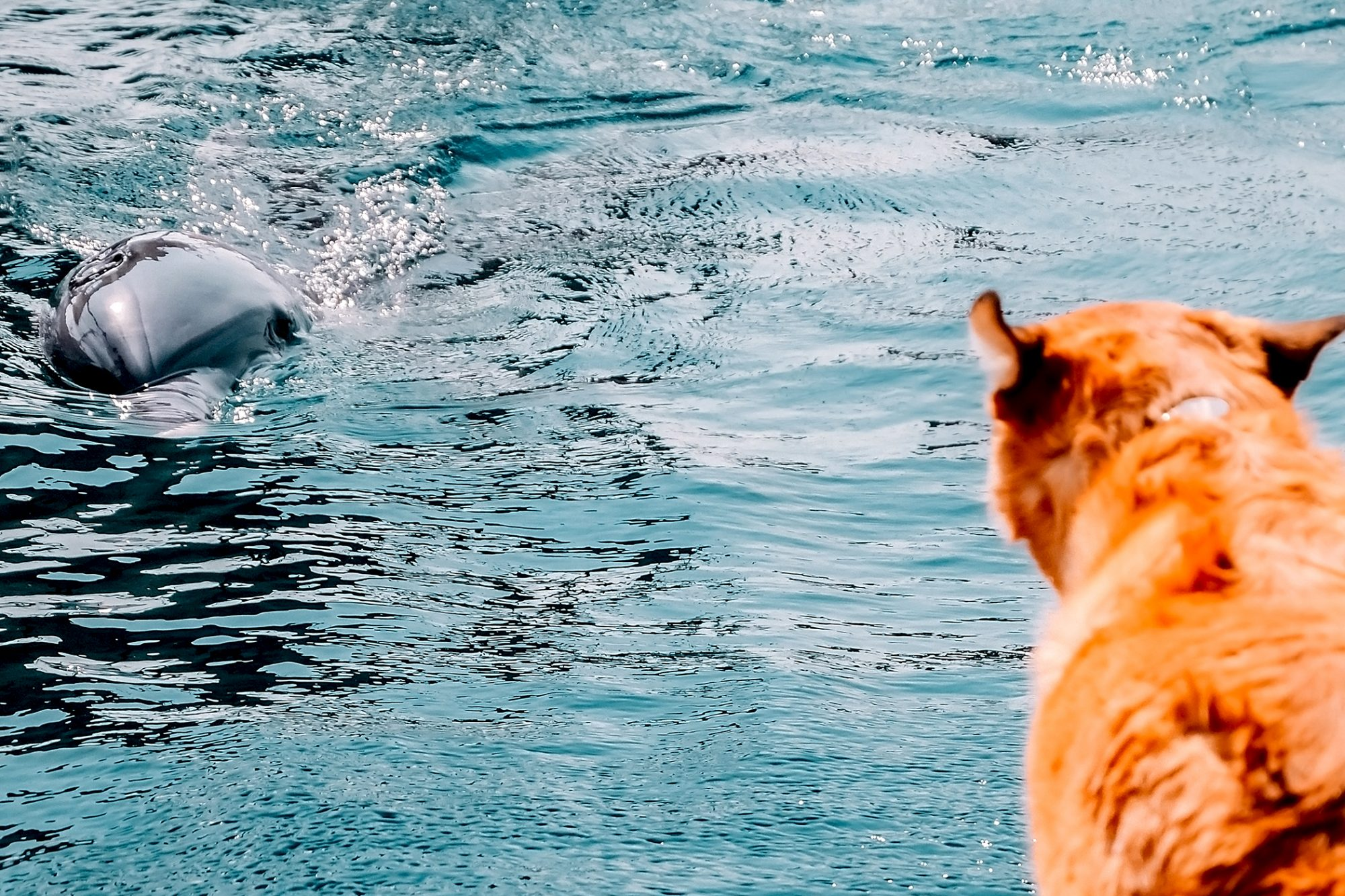 dog looks at dolphin in water