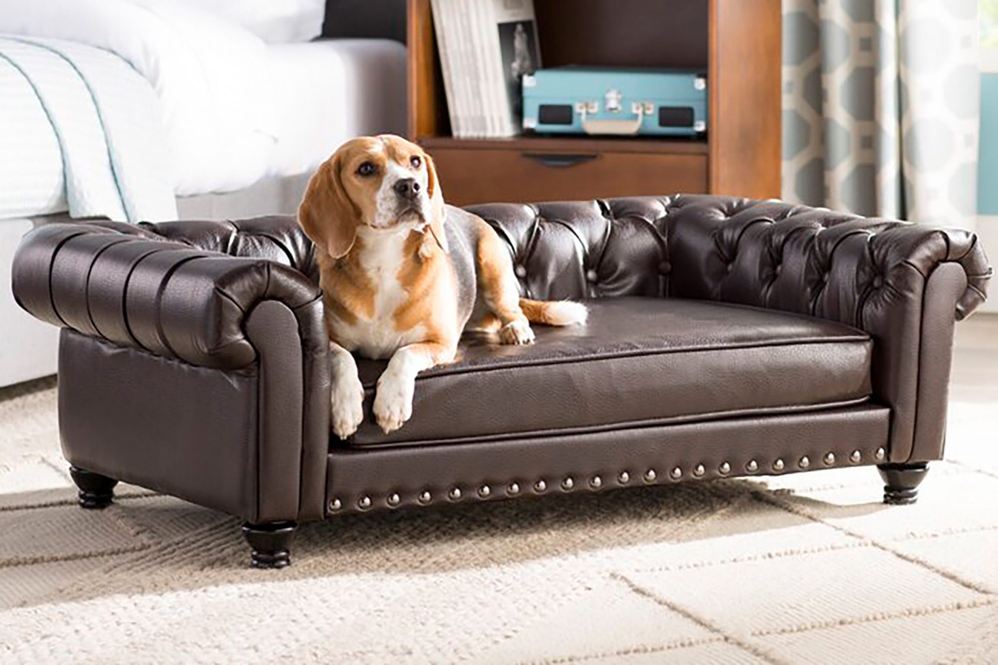 dog lying on dark brown leather dog-sized sofa