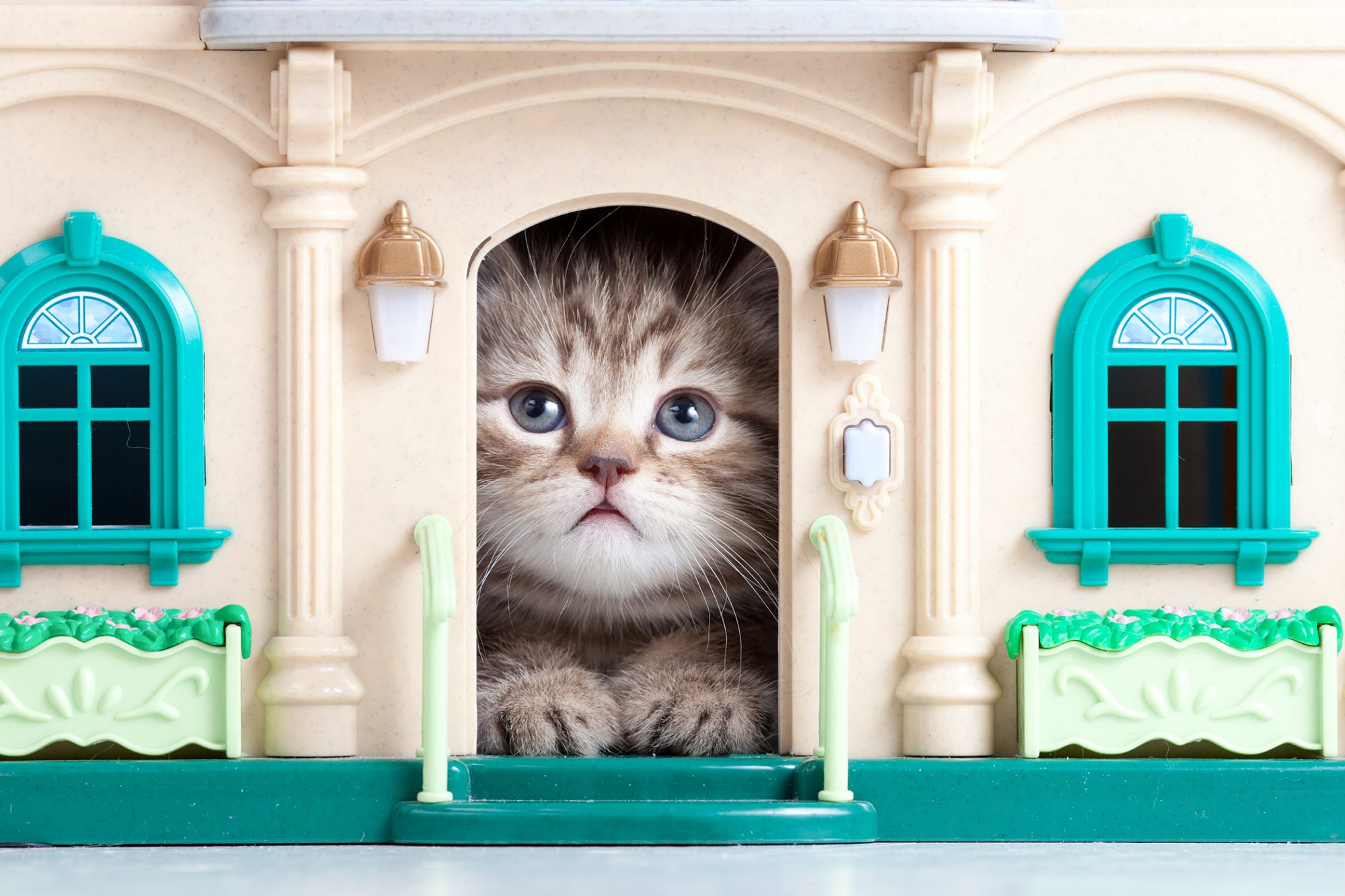 kitten looking out the door of a cat house