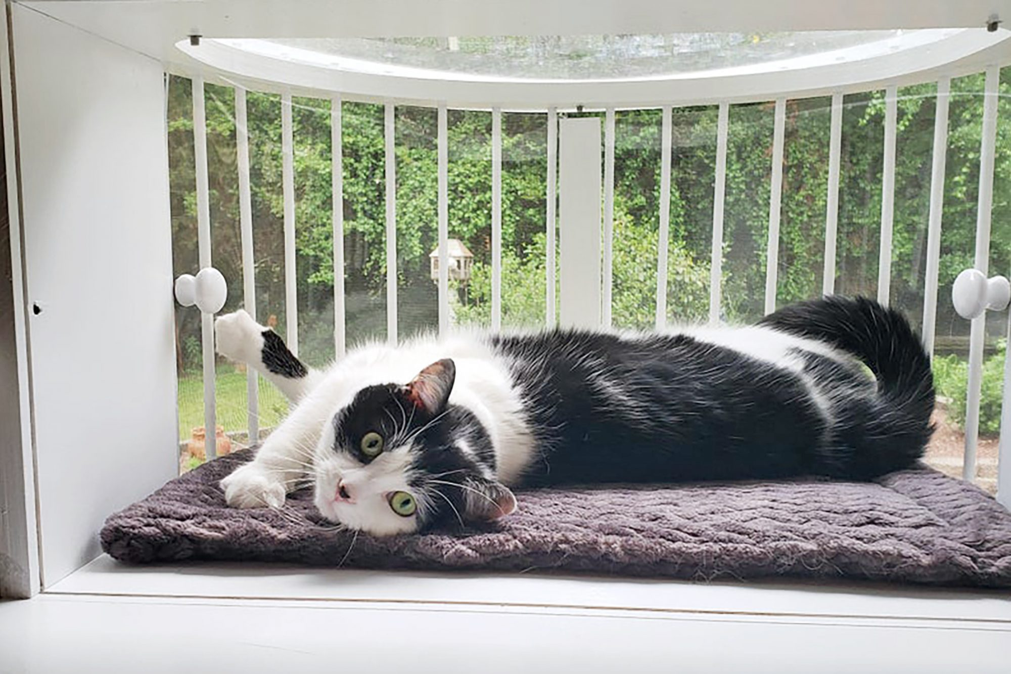 black and white cat stretching out in his catio