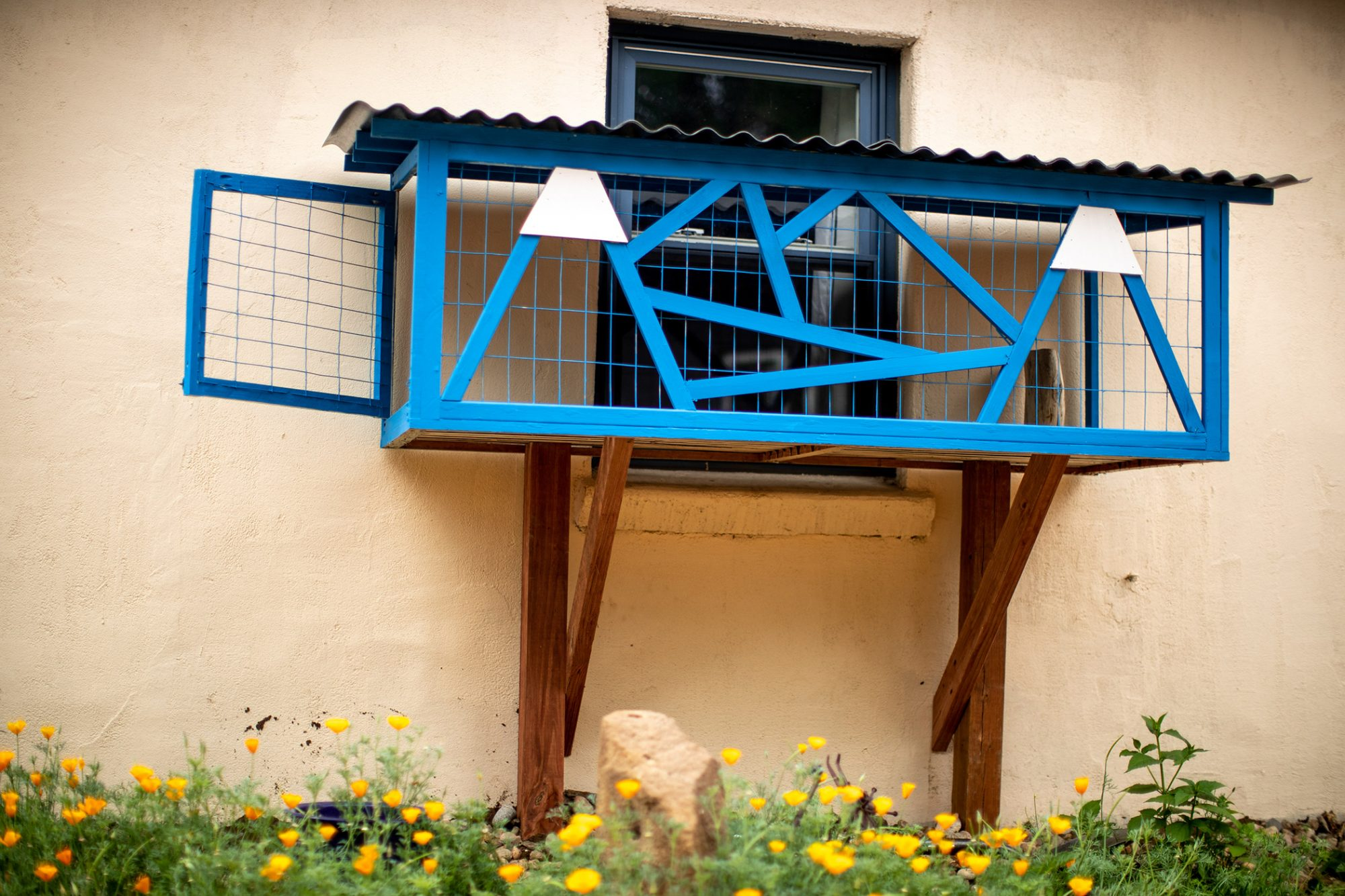 Picture of a blue custom outdoor cat structure attached to window
