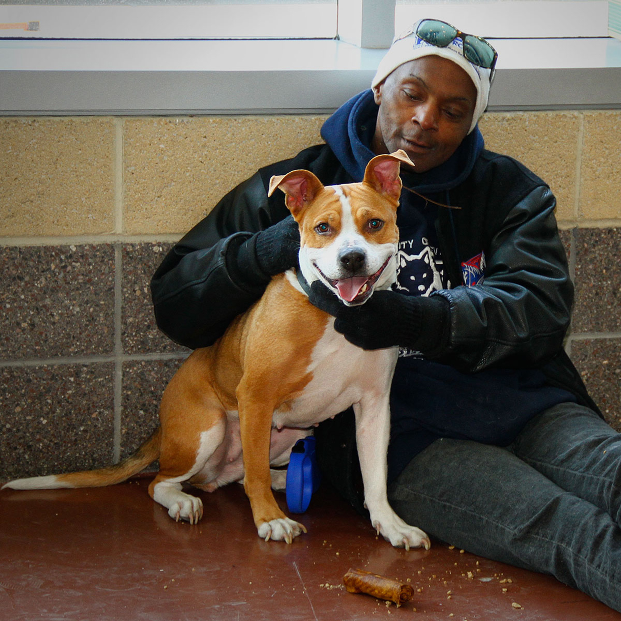 man with his brown and white pit bull