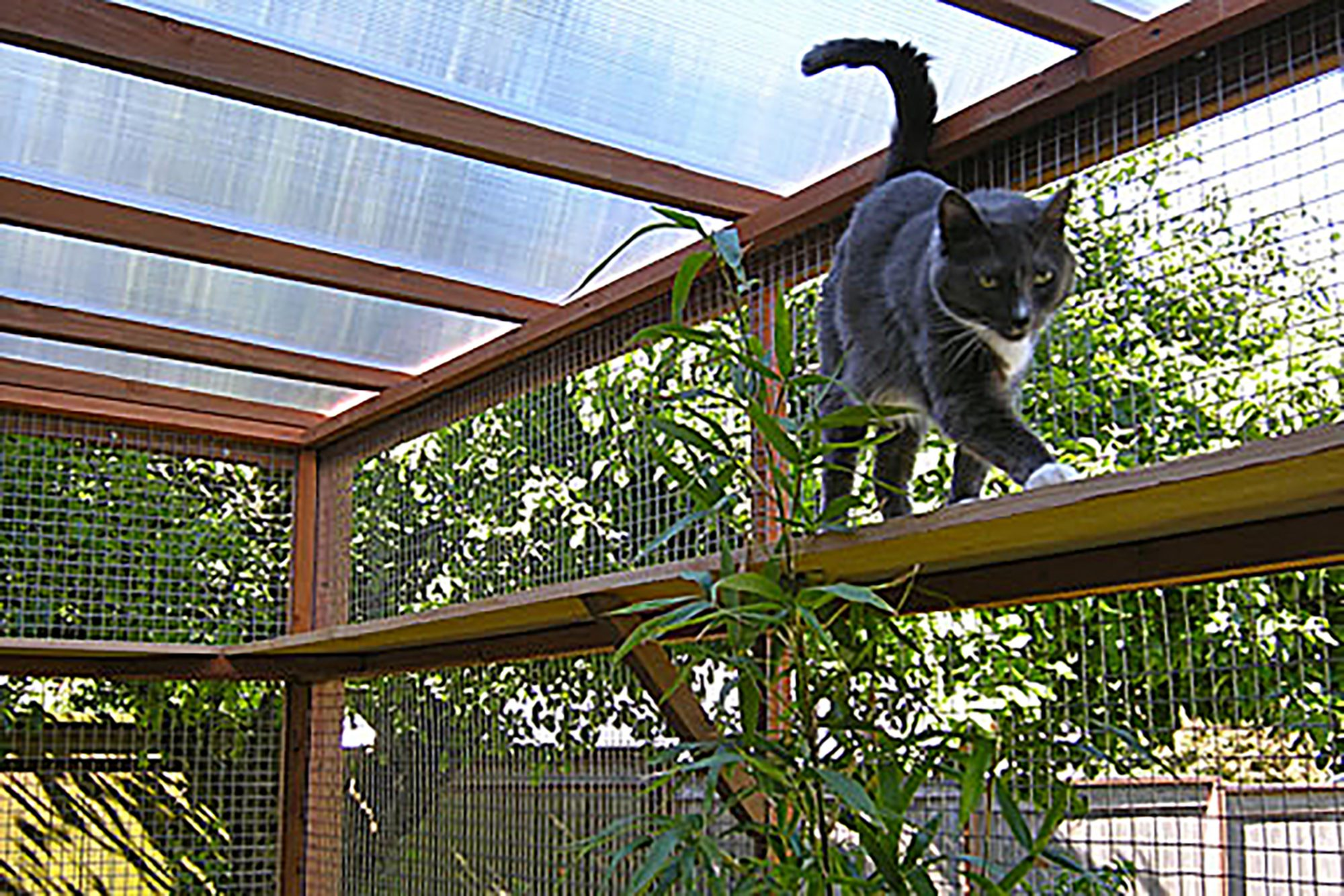 catio interior with cat walking on ledge