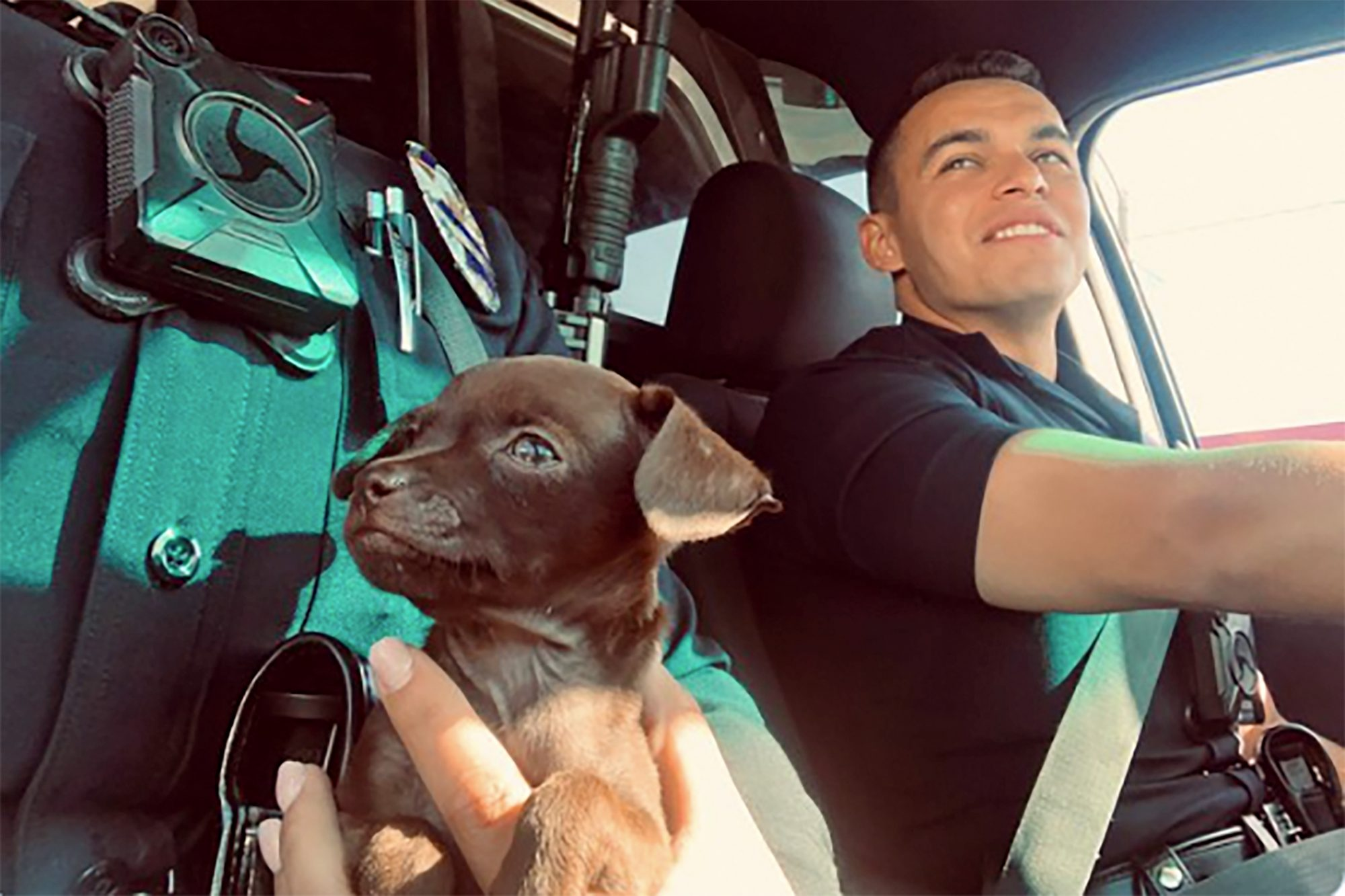 puppy riding in an LAPD police car