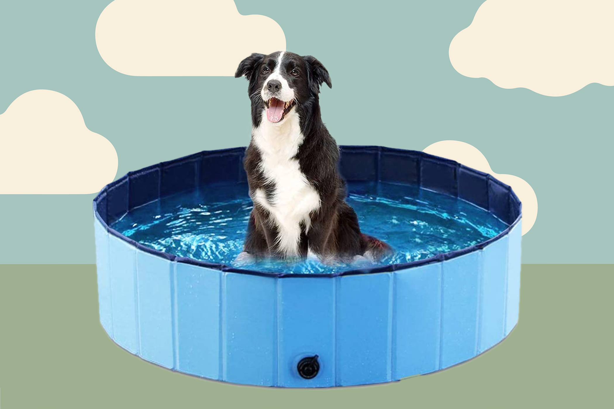 Black and white shepherd sits in dog swimming pool