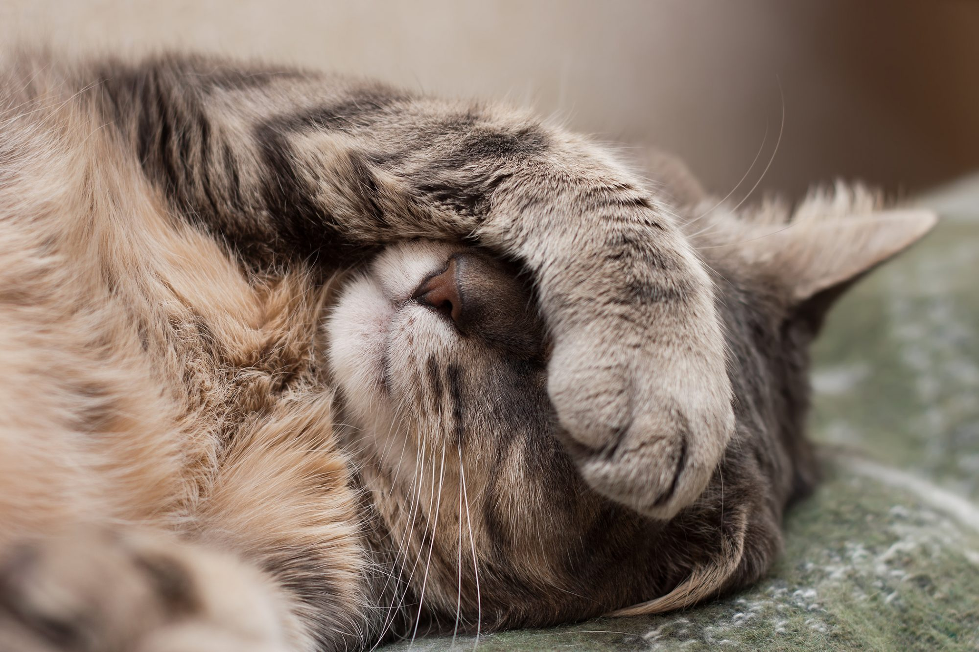 tabby cat sleeping with paw over eyes