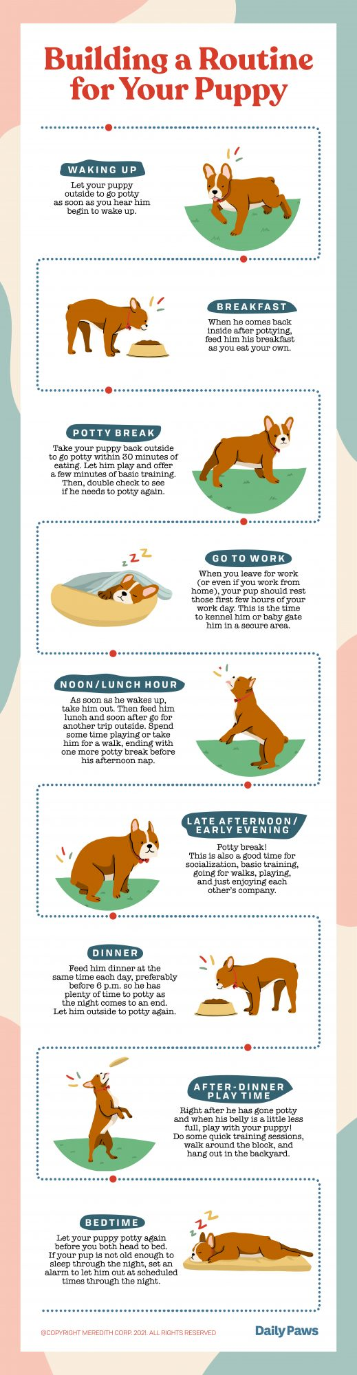Illustrated infographic about a puppy's daily schedule