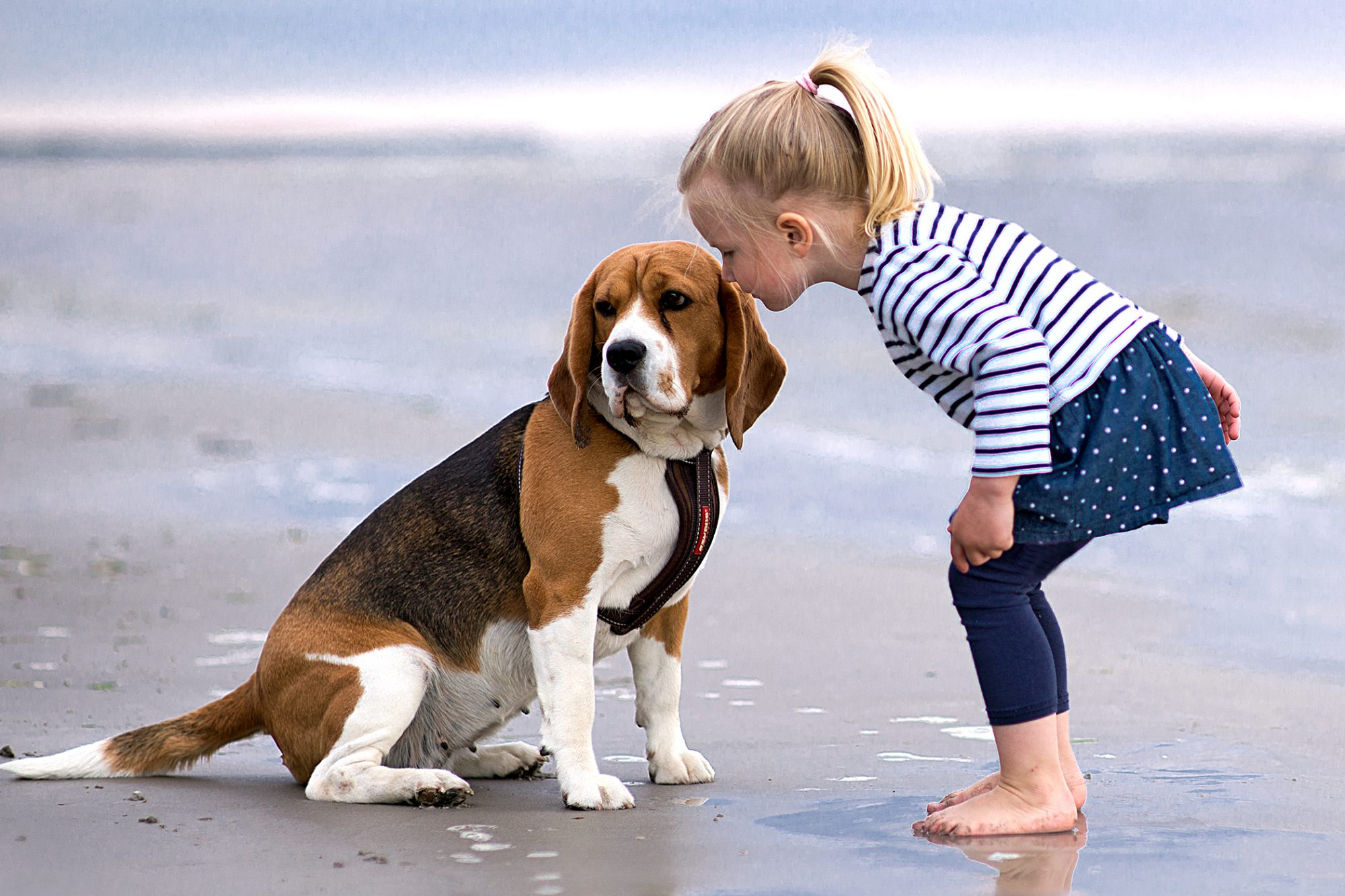 Beagle sits on beach while inspected by young girl