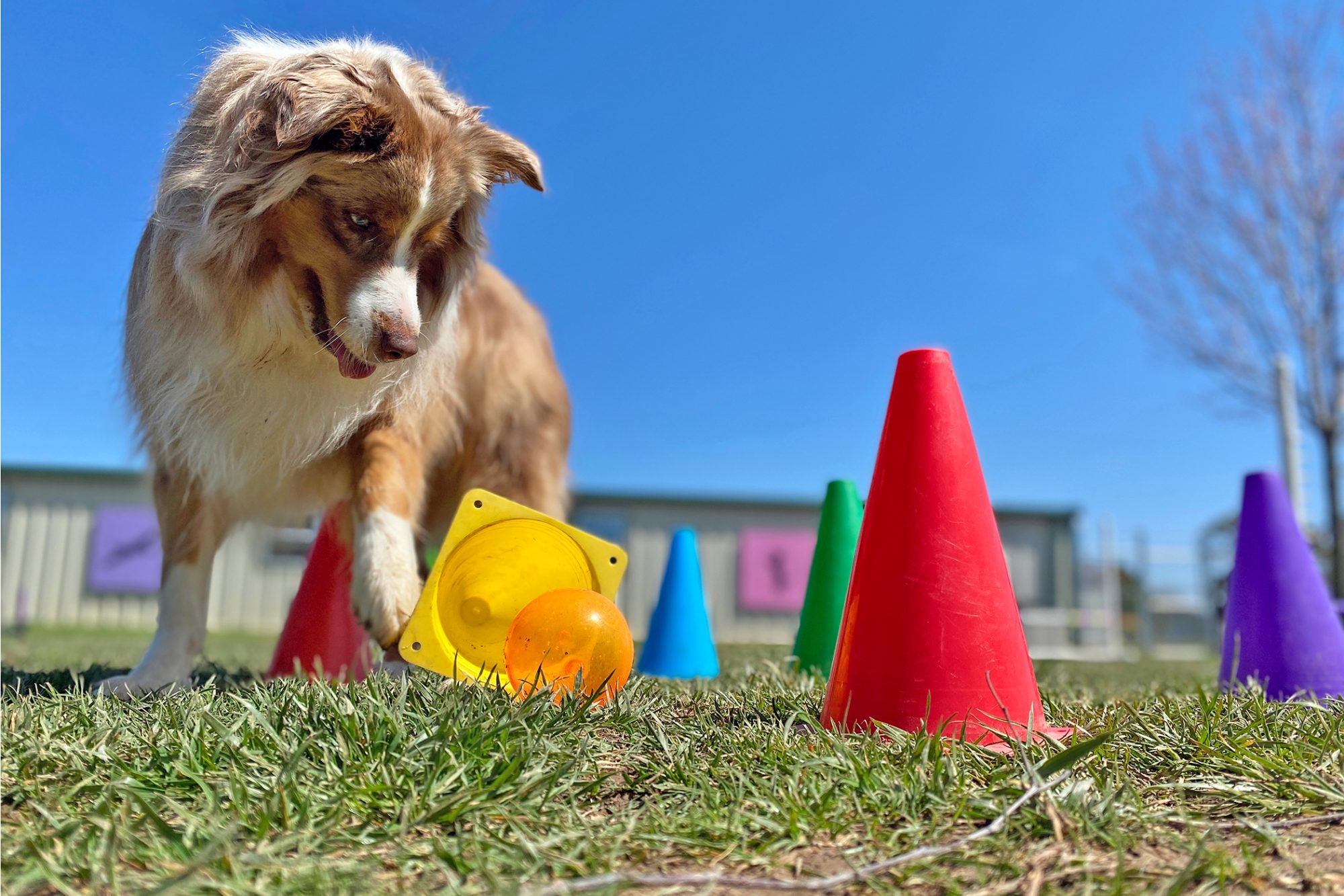 dog playing at doggy daycare