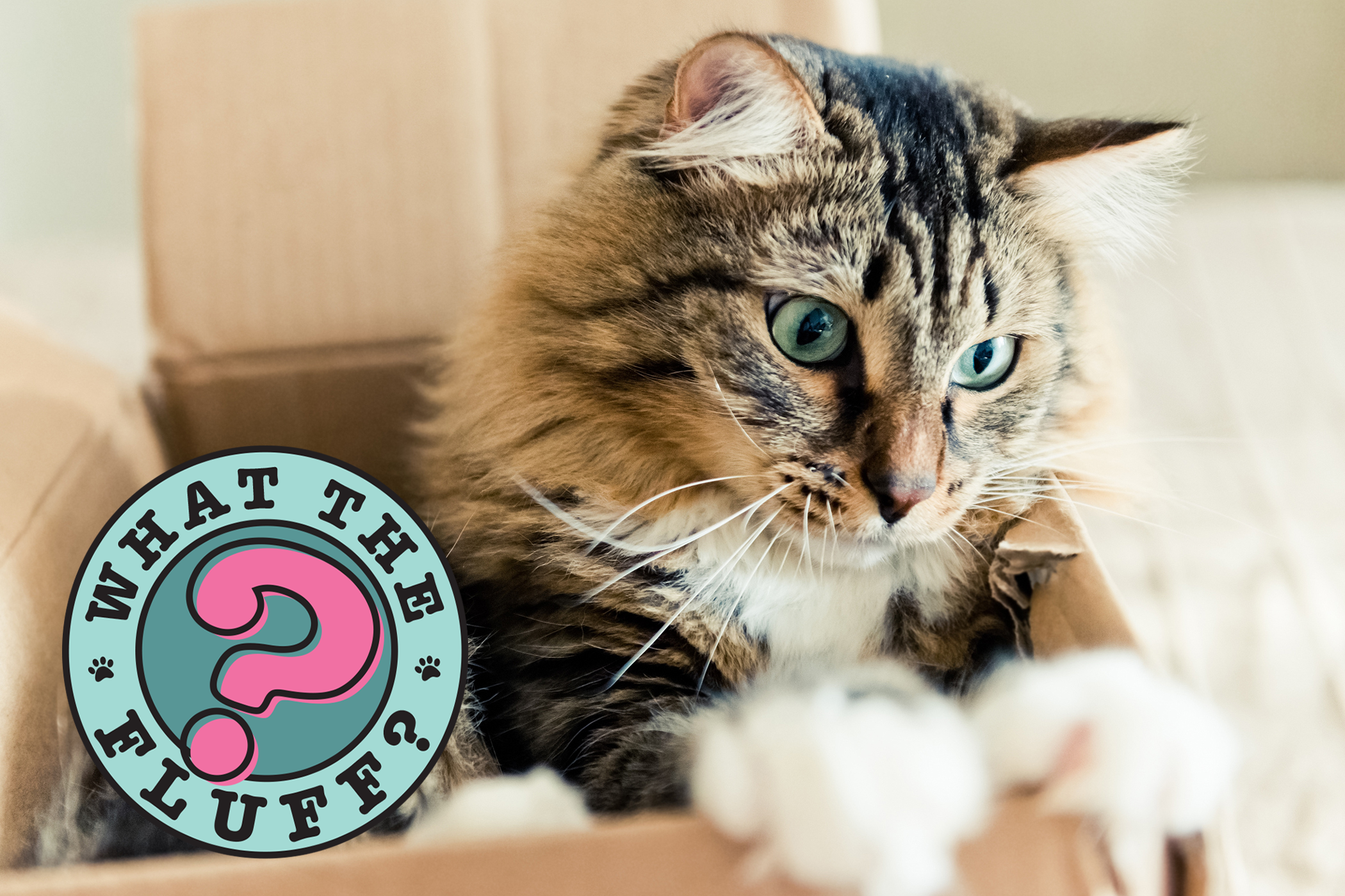 cat in box with What the Fluff logo