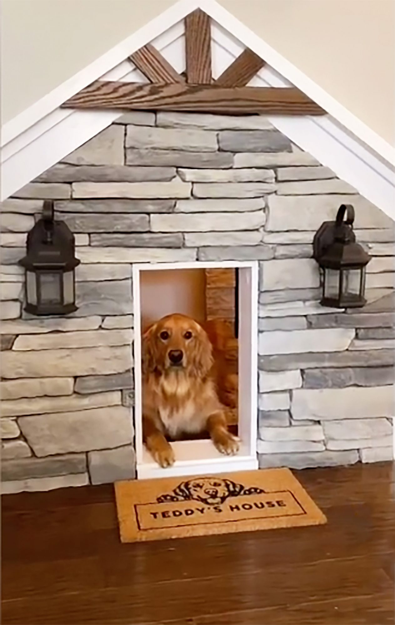 teddy in his dog house