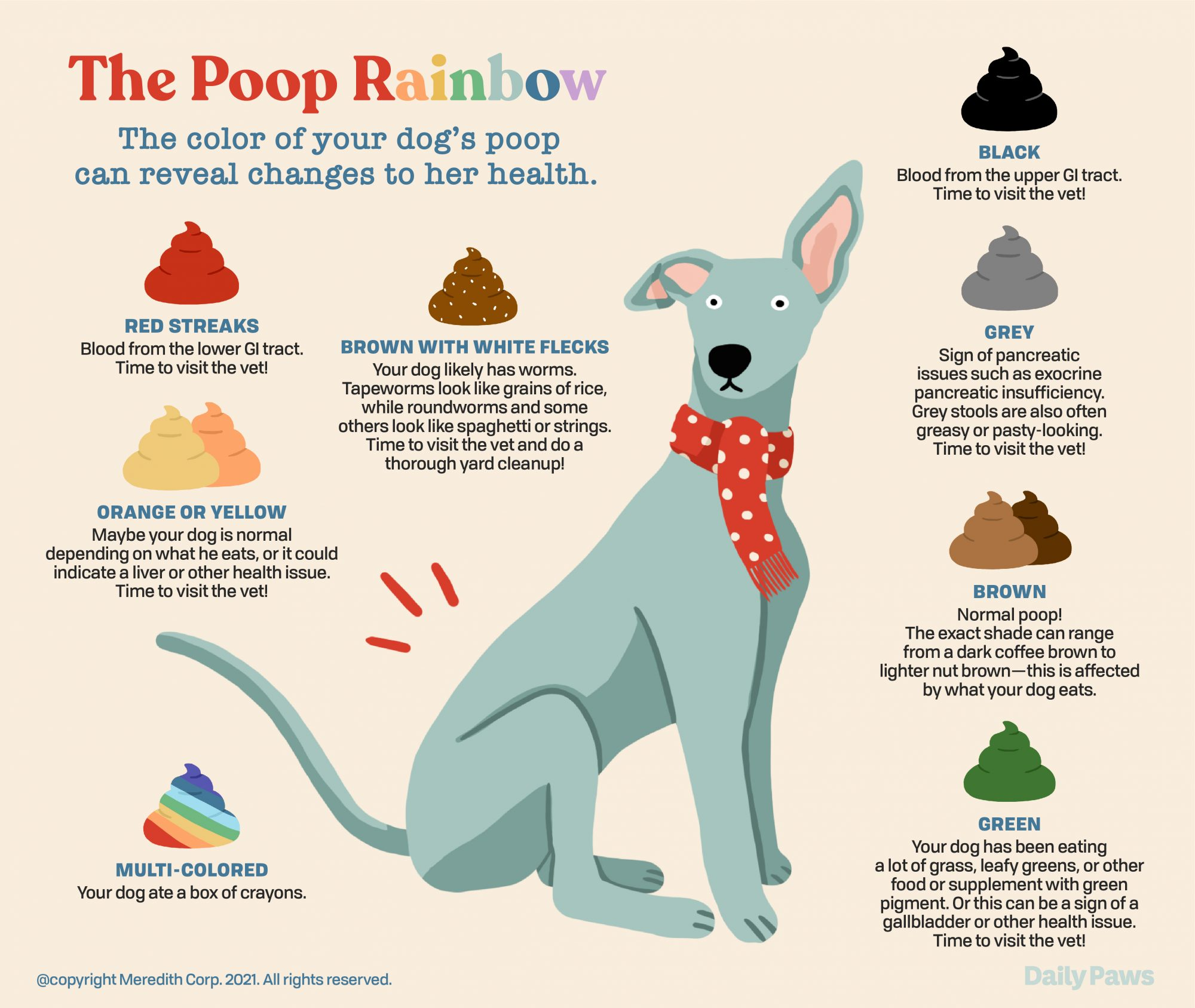 Dog poo chart showing what different colored poo means