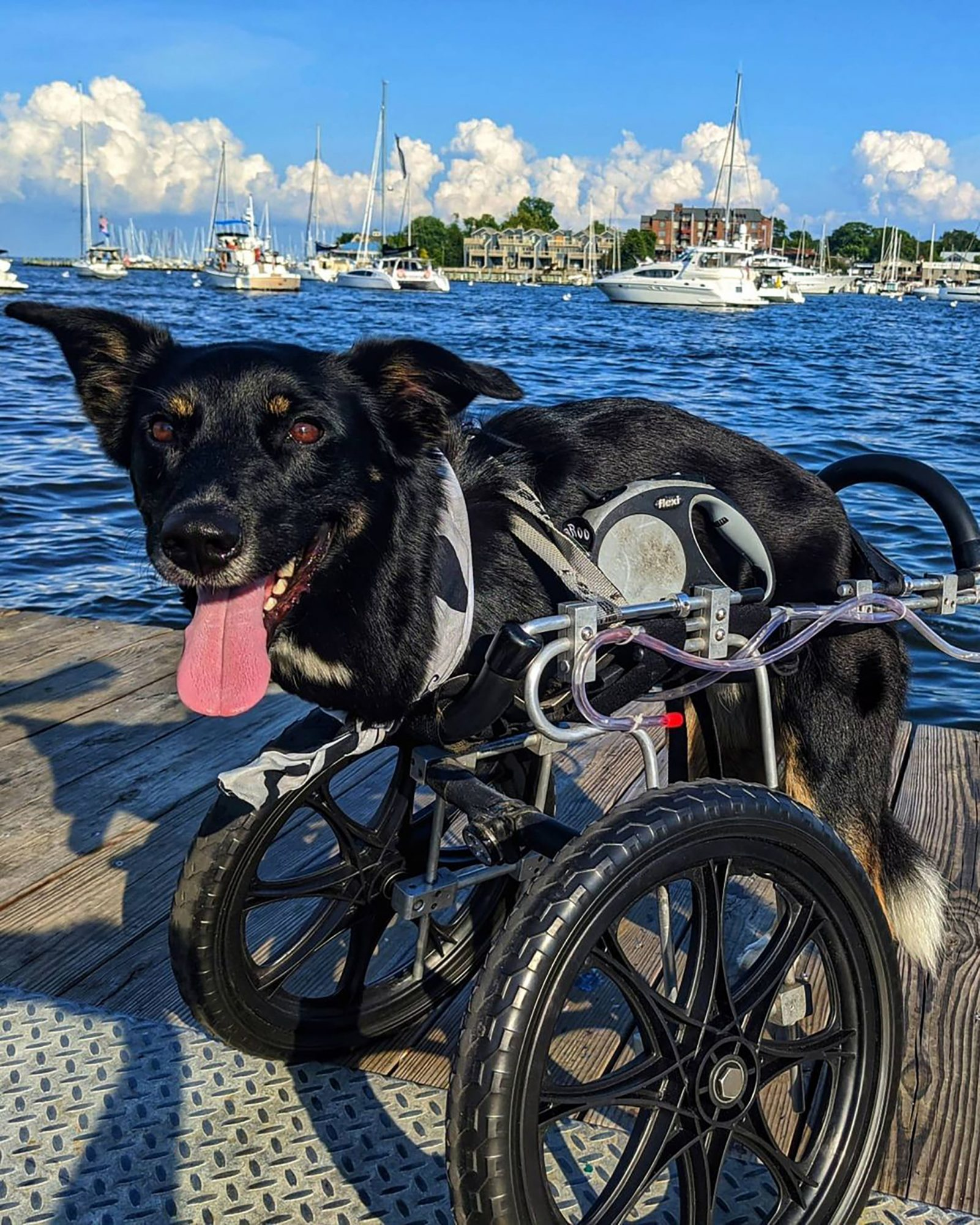 Austin Roo in a wheelchair posing by the water