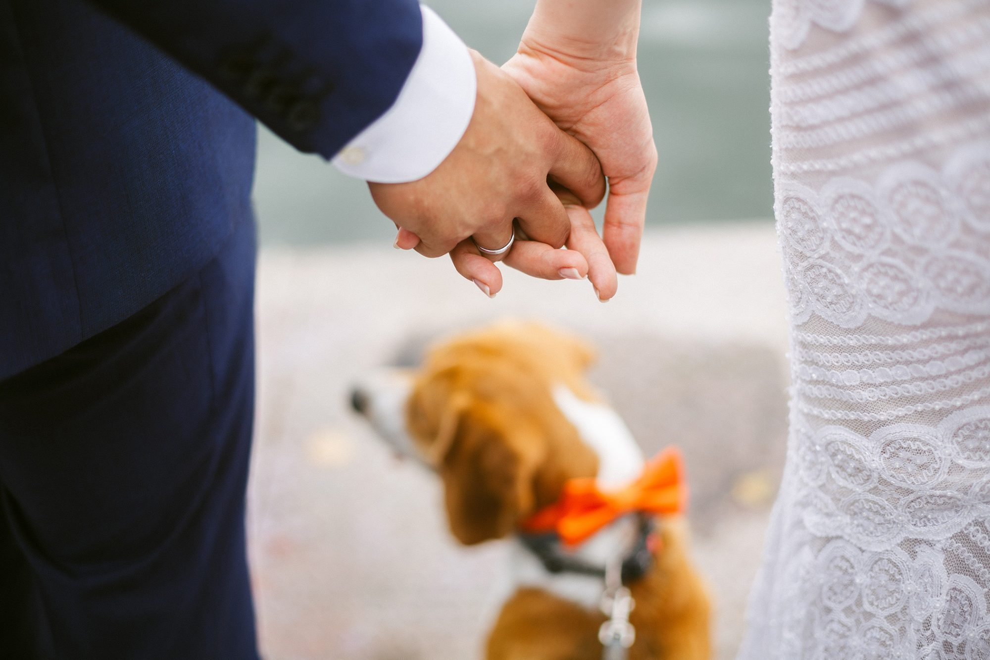 Bride and Groom holding hands with dog standing in front