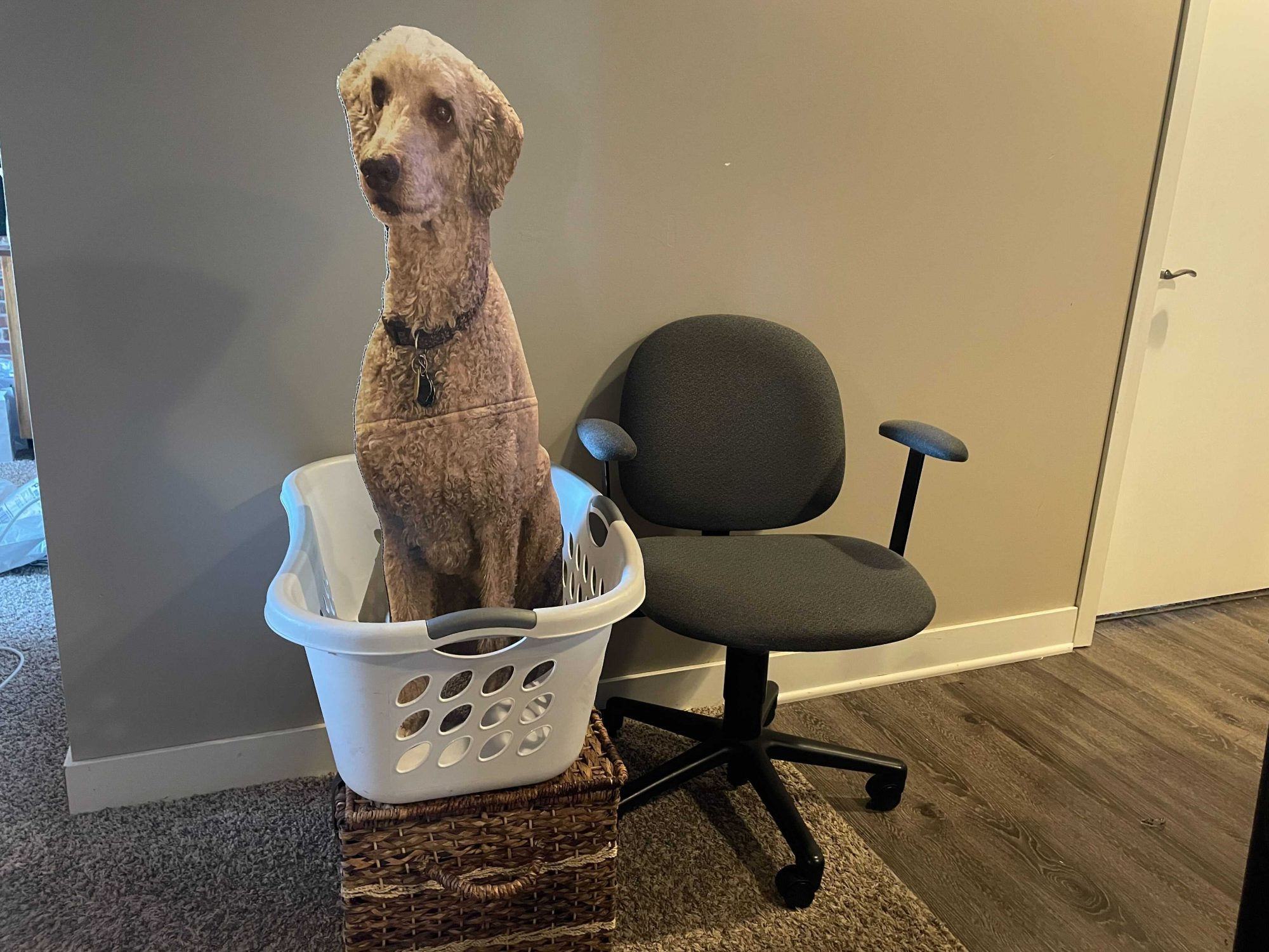 carboard cutout of poodle in laundry basket next to office chair