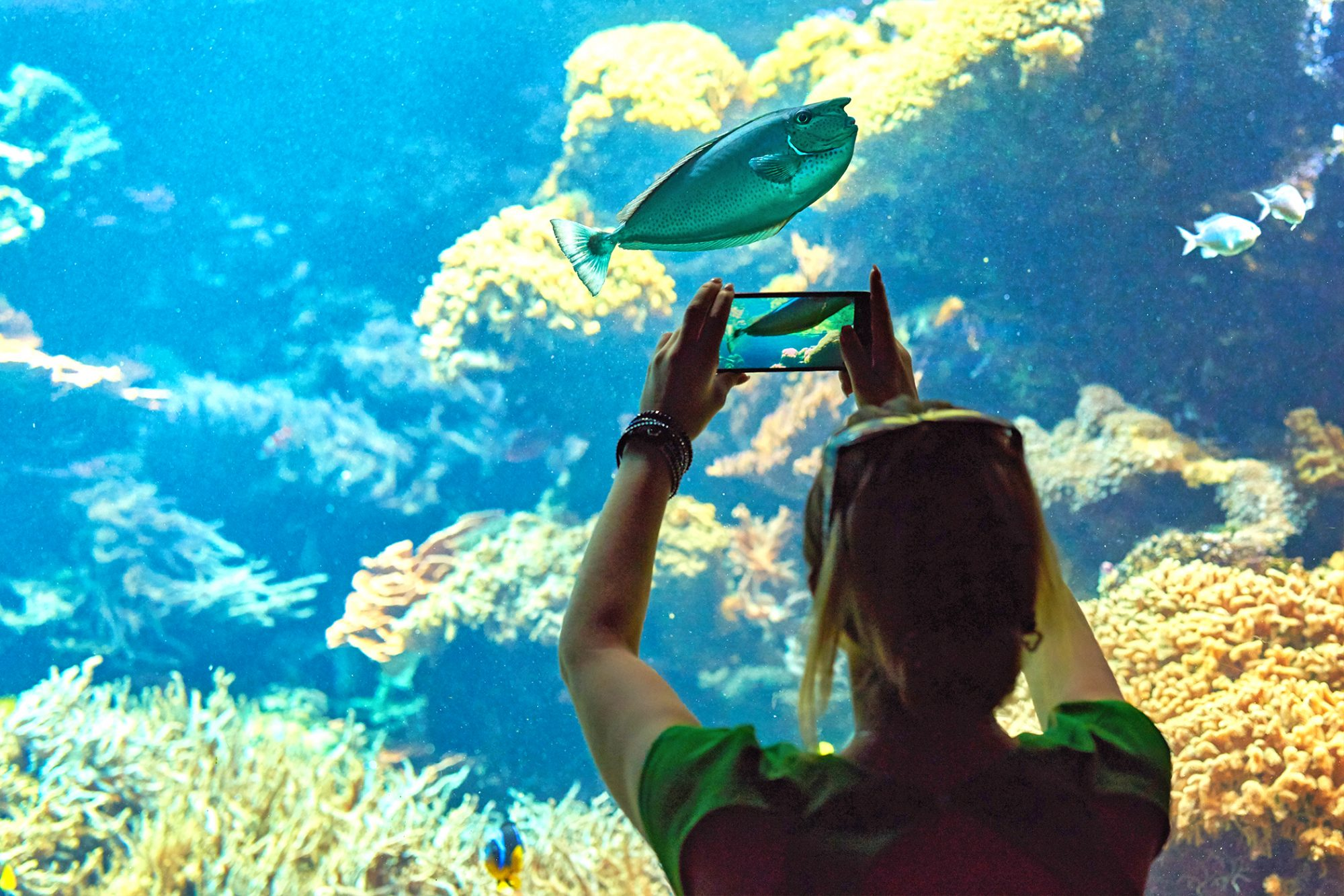 woman taking a photo of an aquarium with her smart phone