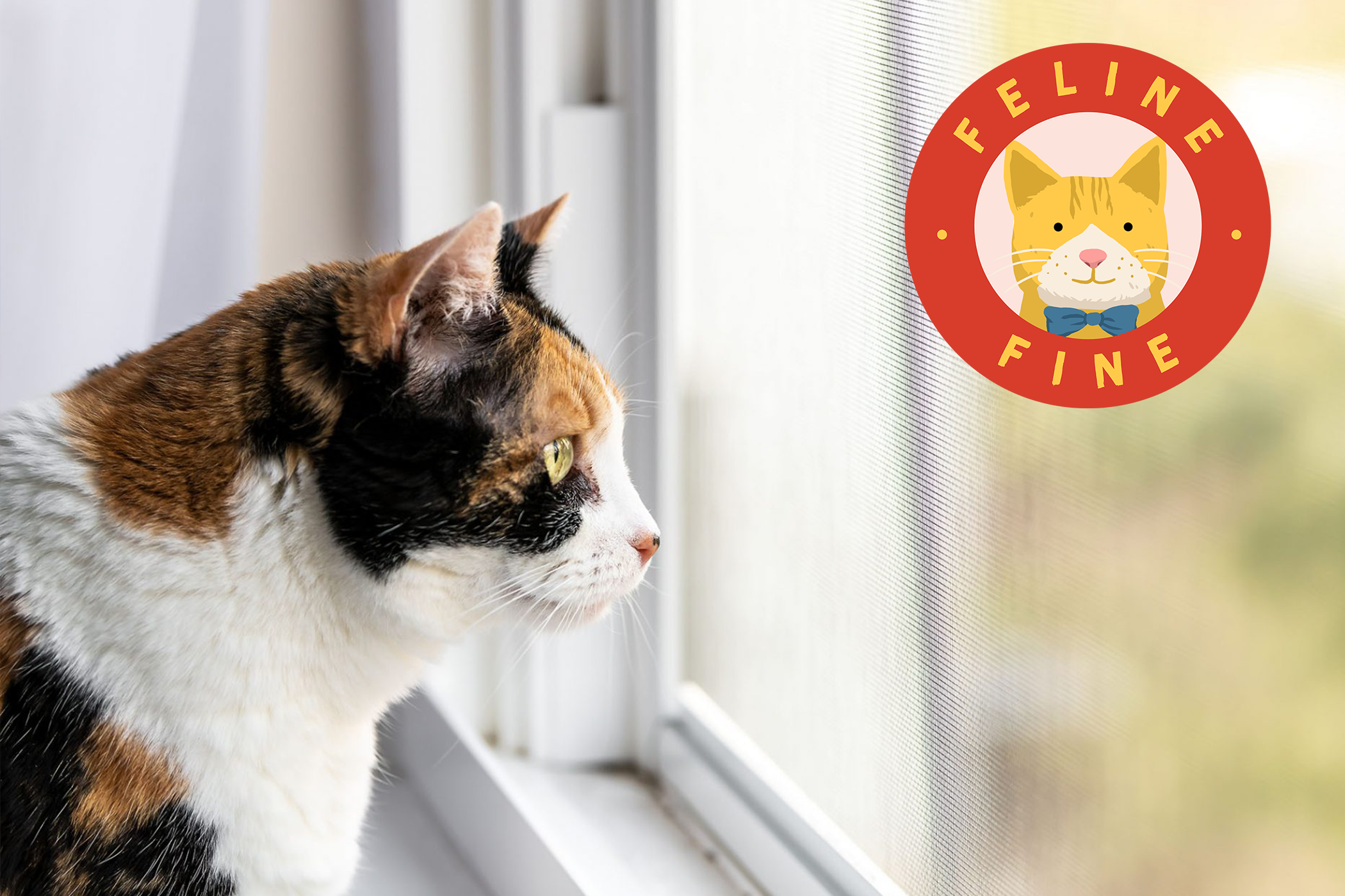 cat looking out the window with Feline Fine logo