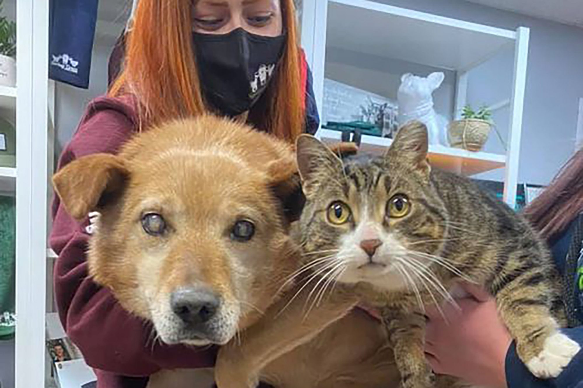 Blind dog with his seeing-eye cat