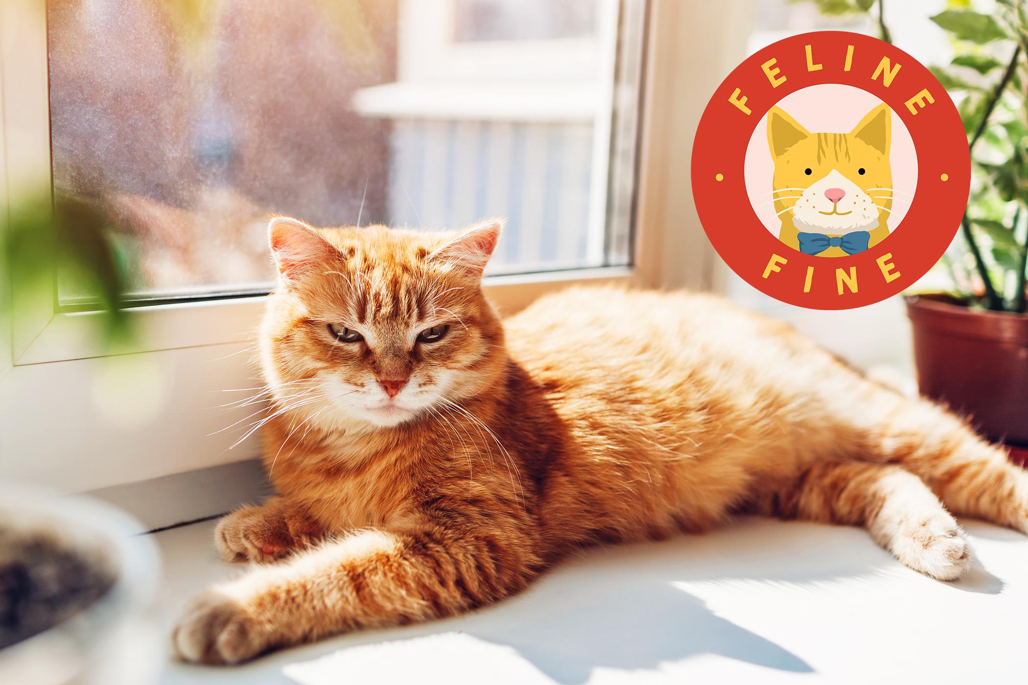 Ginger cat lying on window sill at home in the sun with feline fine graphic
